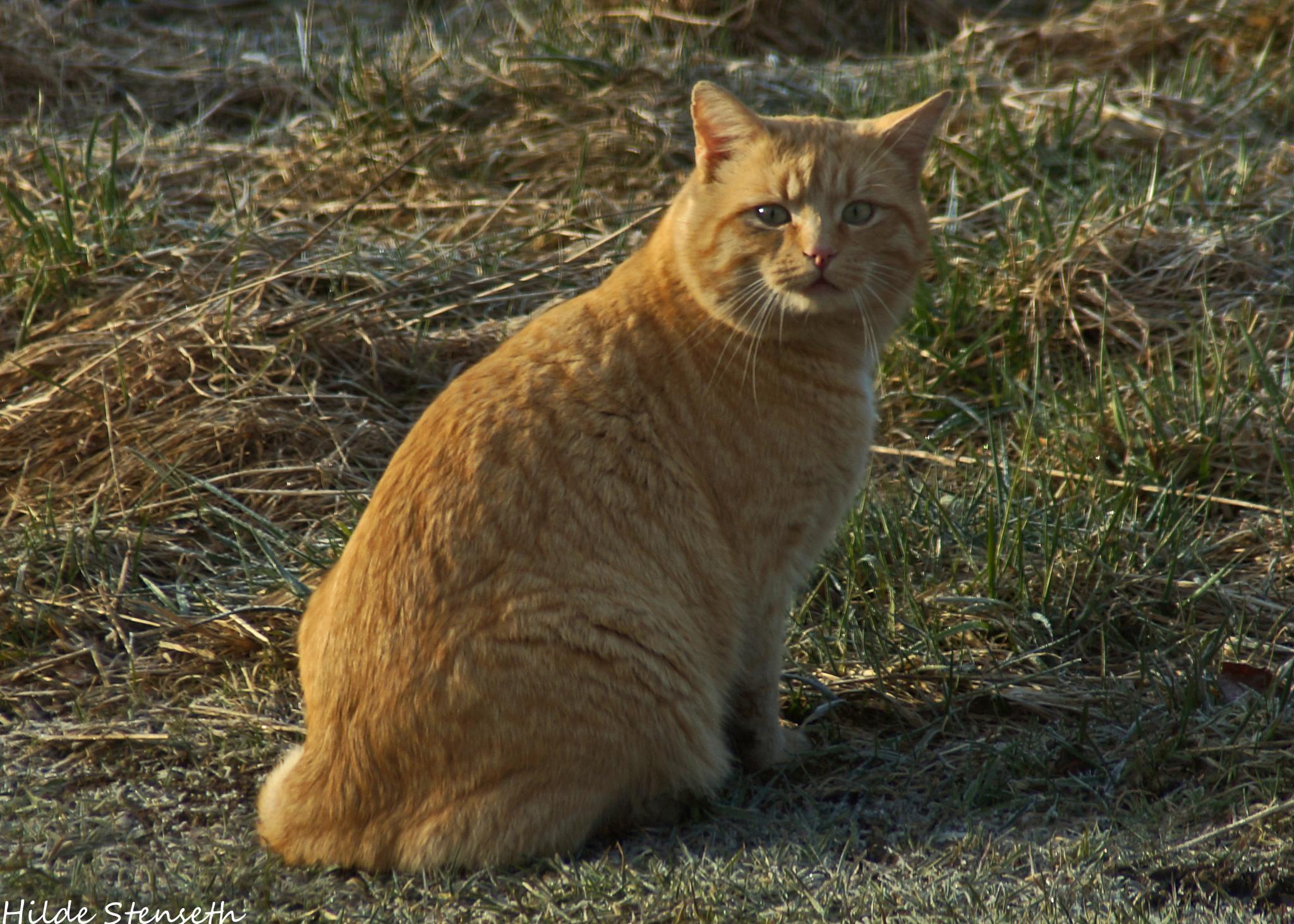 Cat! by hilde.stenseth.7