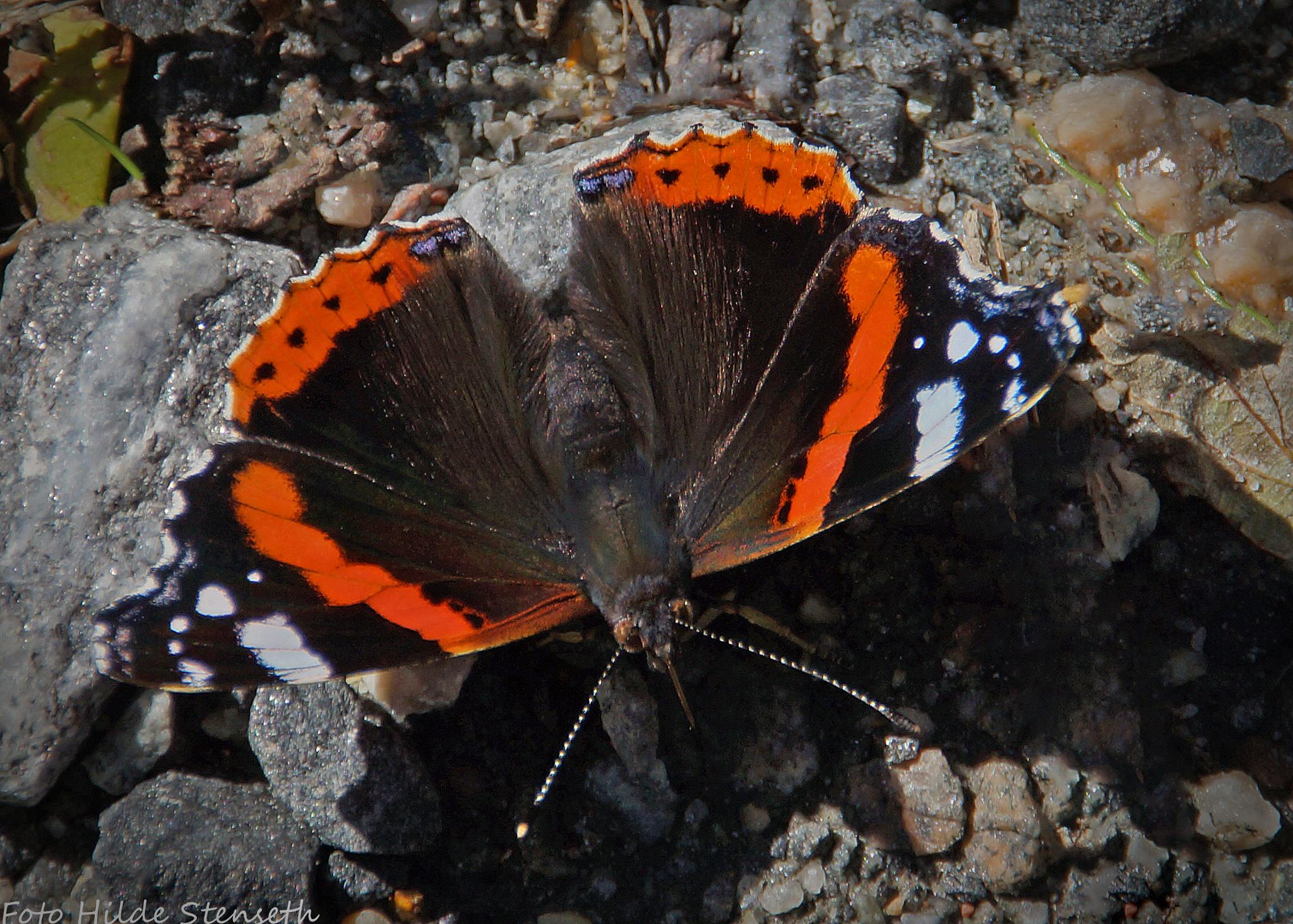 Butterfly! by hilde.stenseth.7