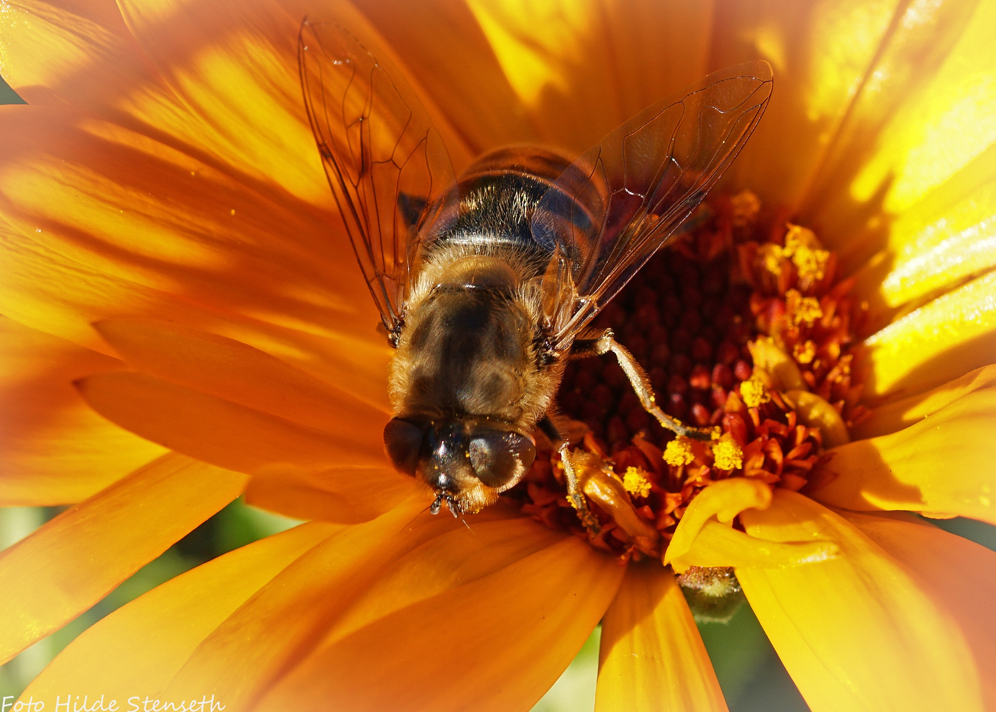 Hoverfly! by hilde.stenseth.7