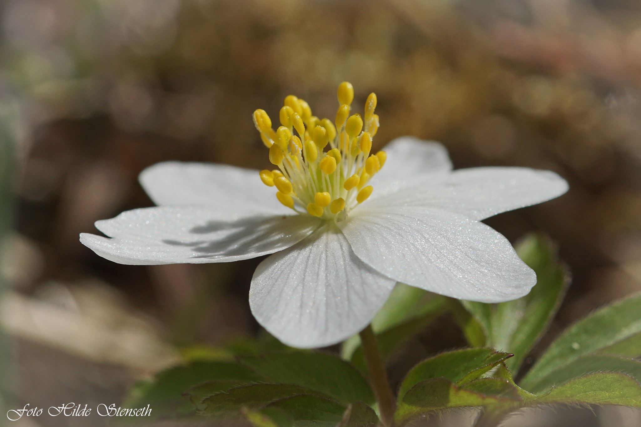 Anemone! by hilde.stenseth.7