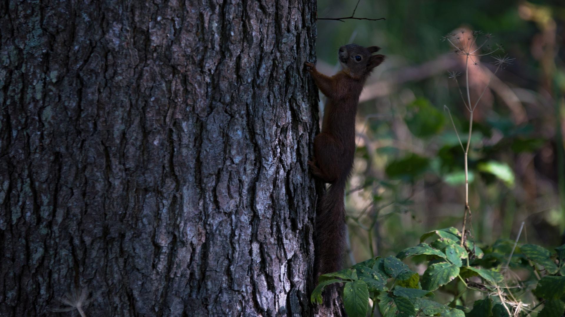Squirrel!!! by Janne Peimola