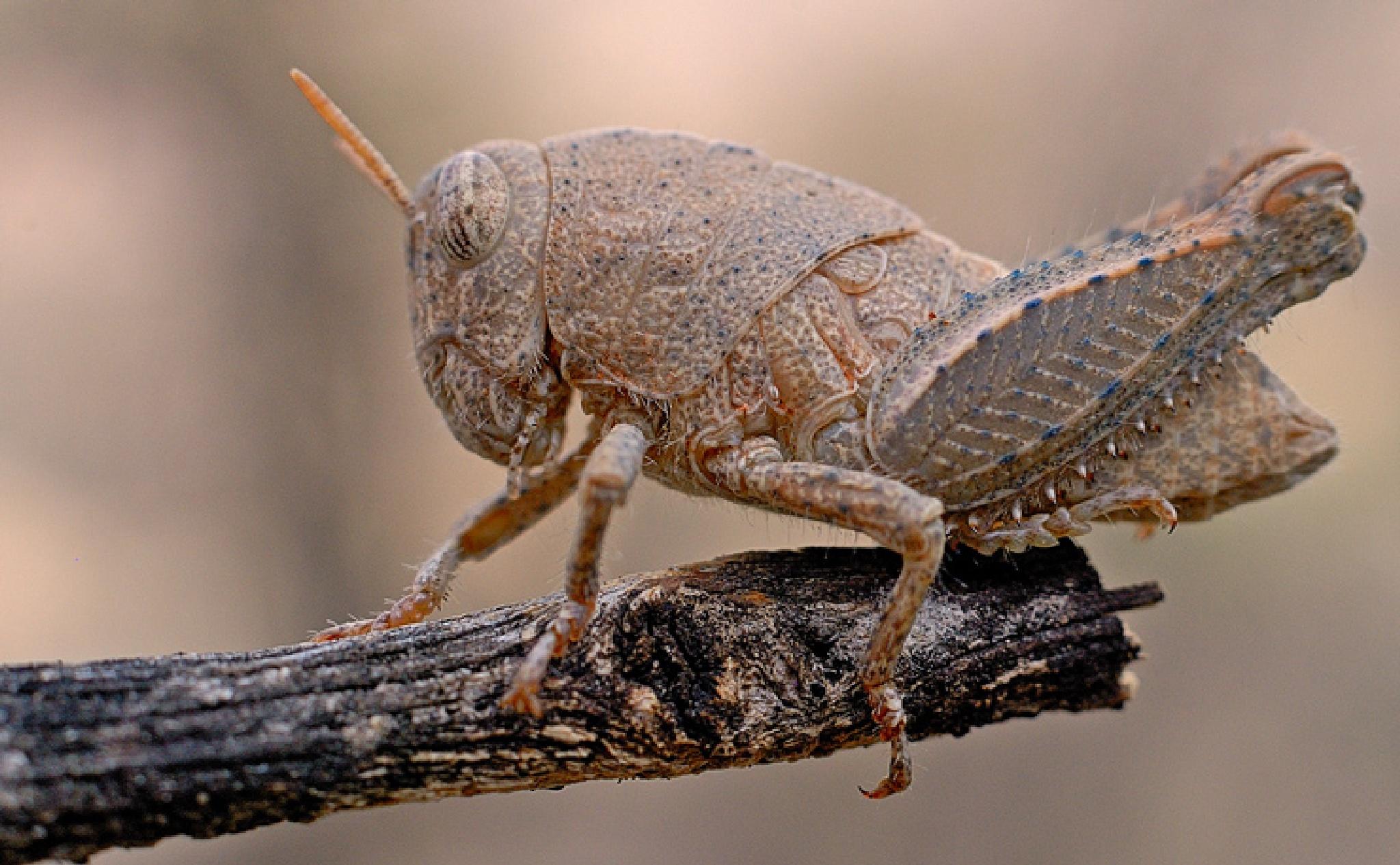 Grasshoper  by malekjmd10