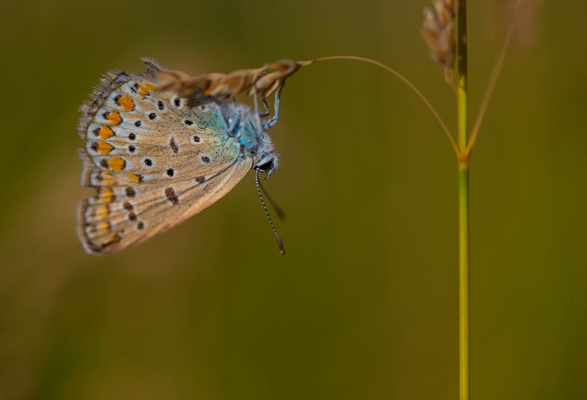 Butterfly by malekjmd10