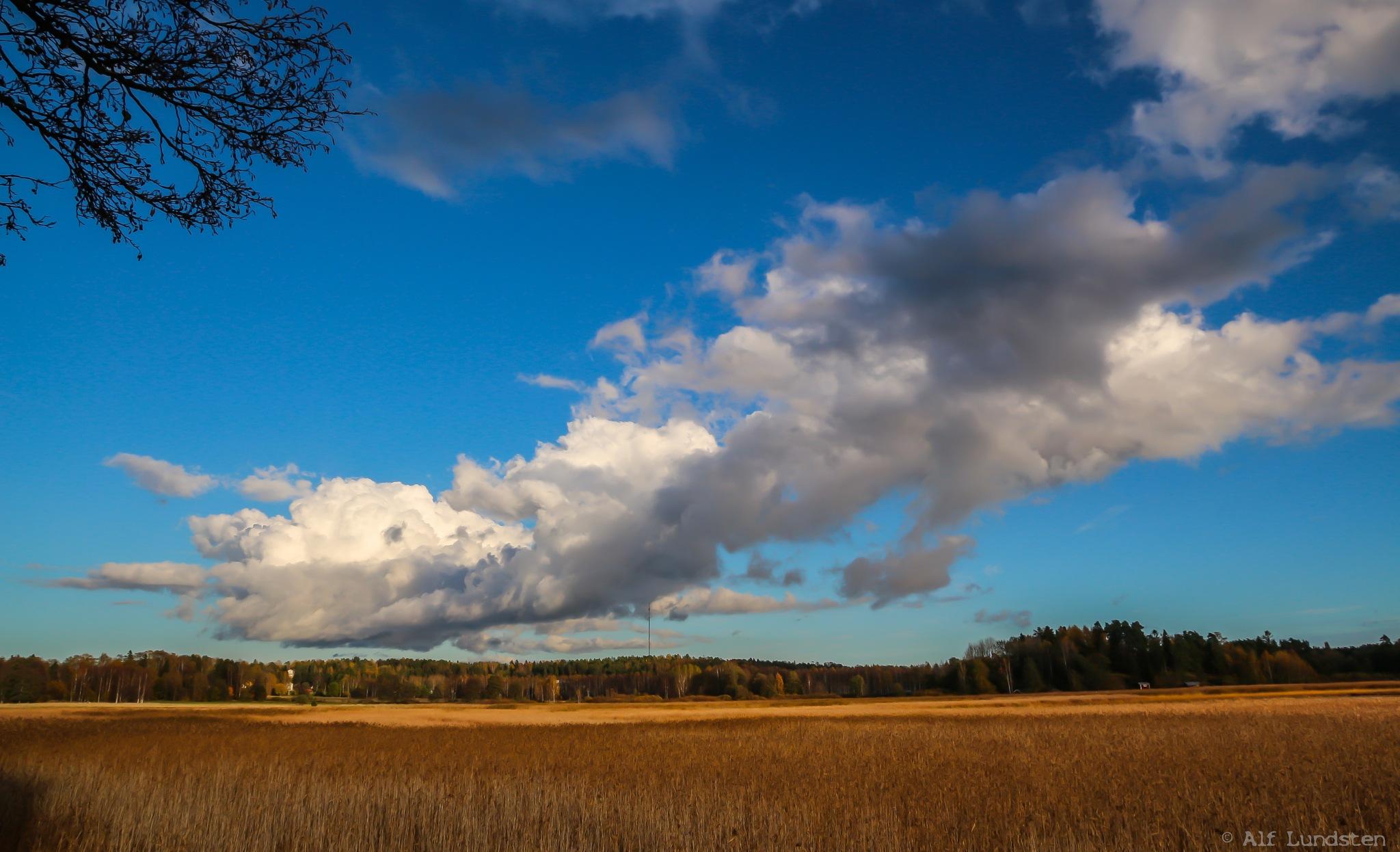 Golden autumn reed by alf lundsten