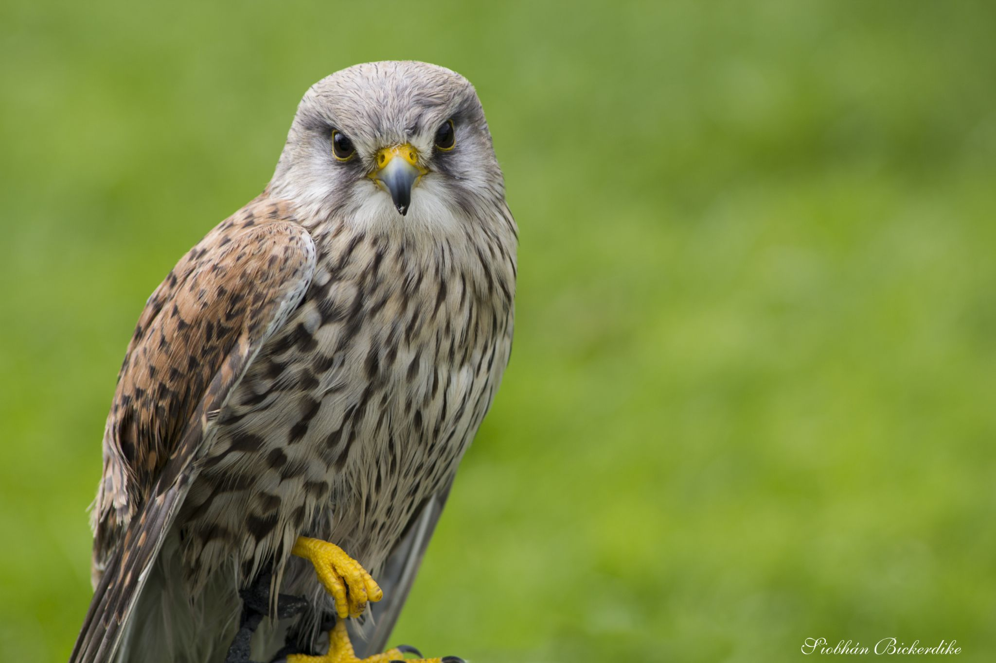 Bird by Siobhan Bickerdike