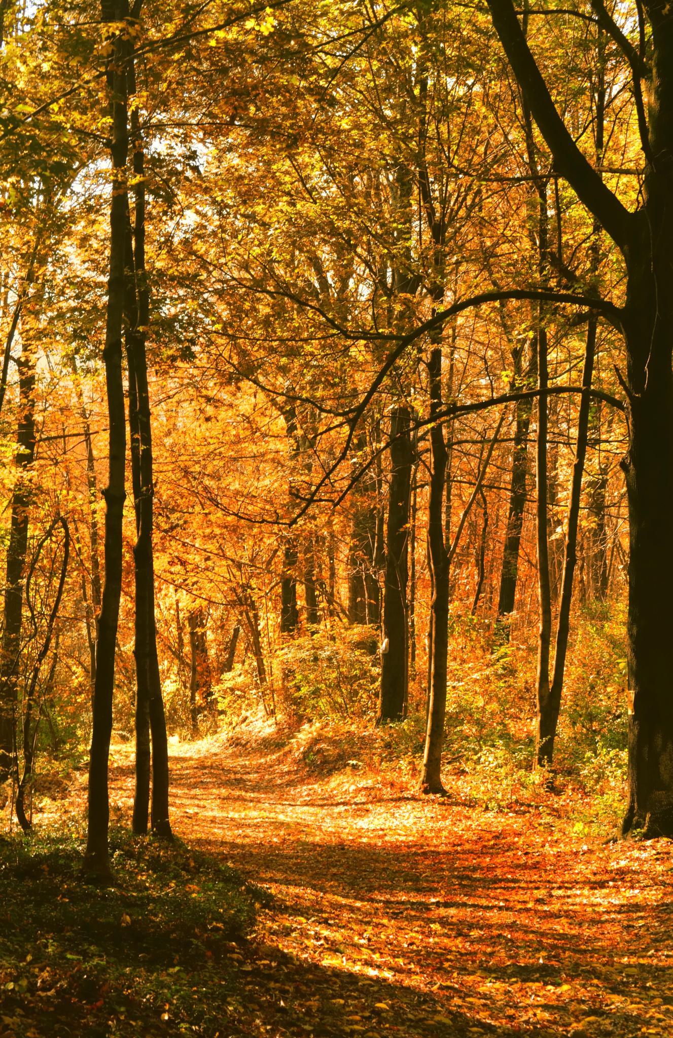 Sunny path by sue_duq