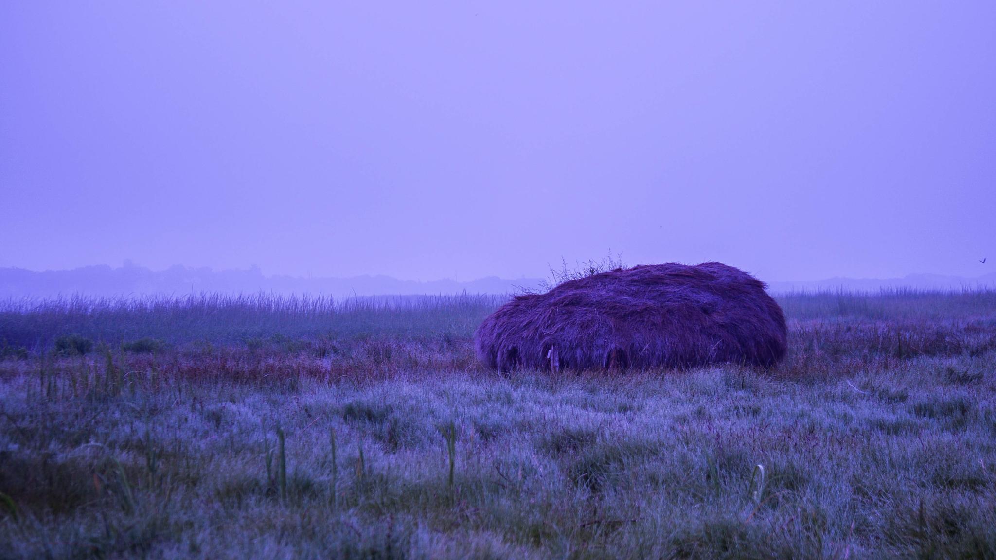 Dawn by sue_duq