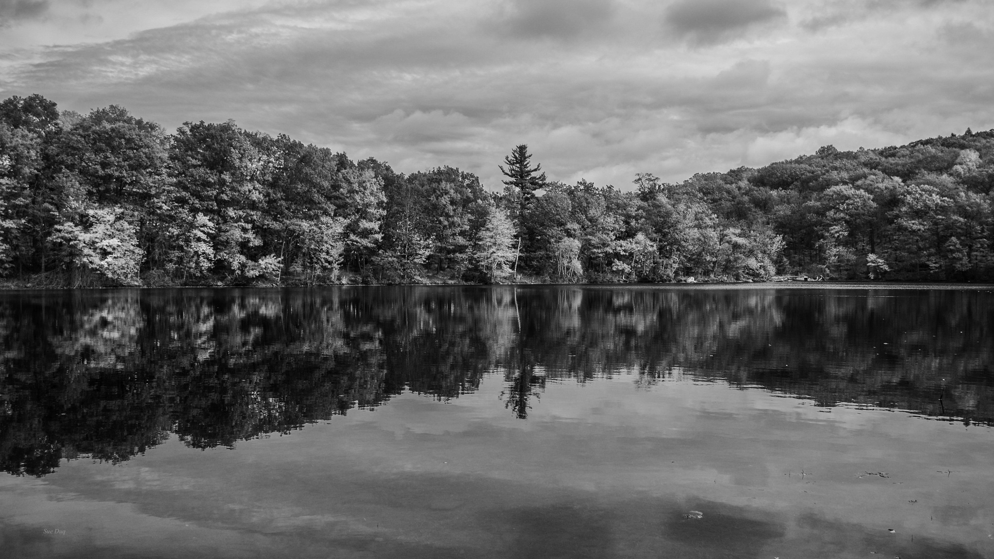 Reflections by sue_duq