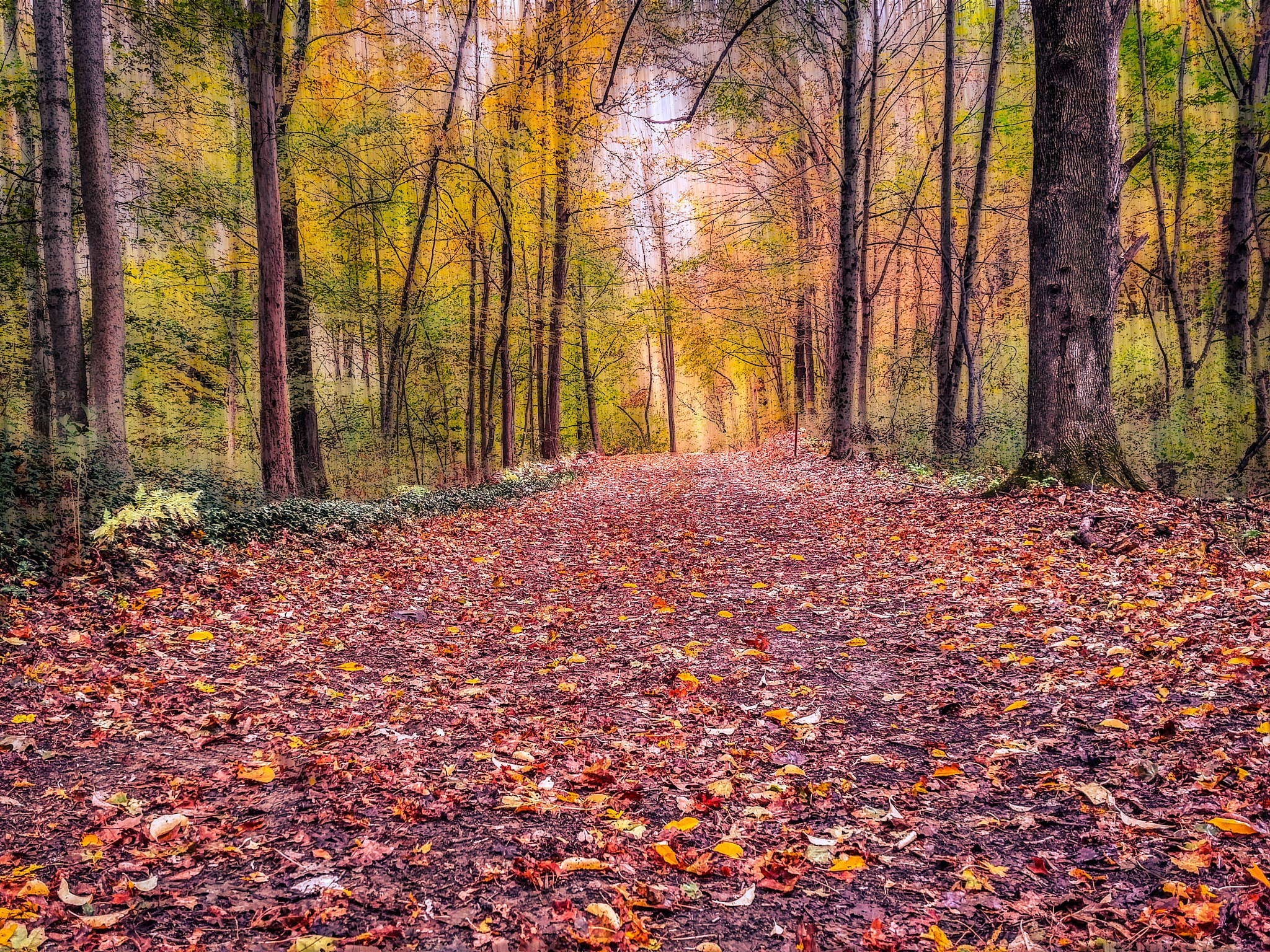 Forest trail by sue_duq