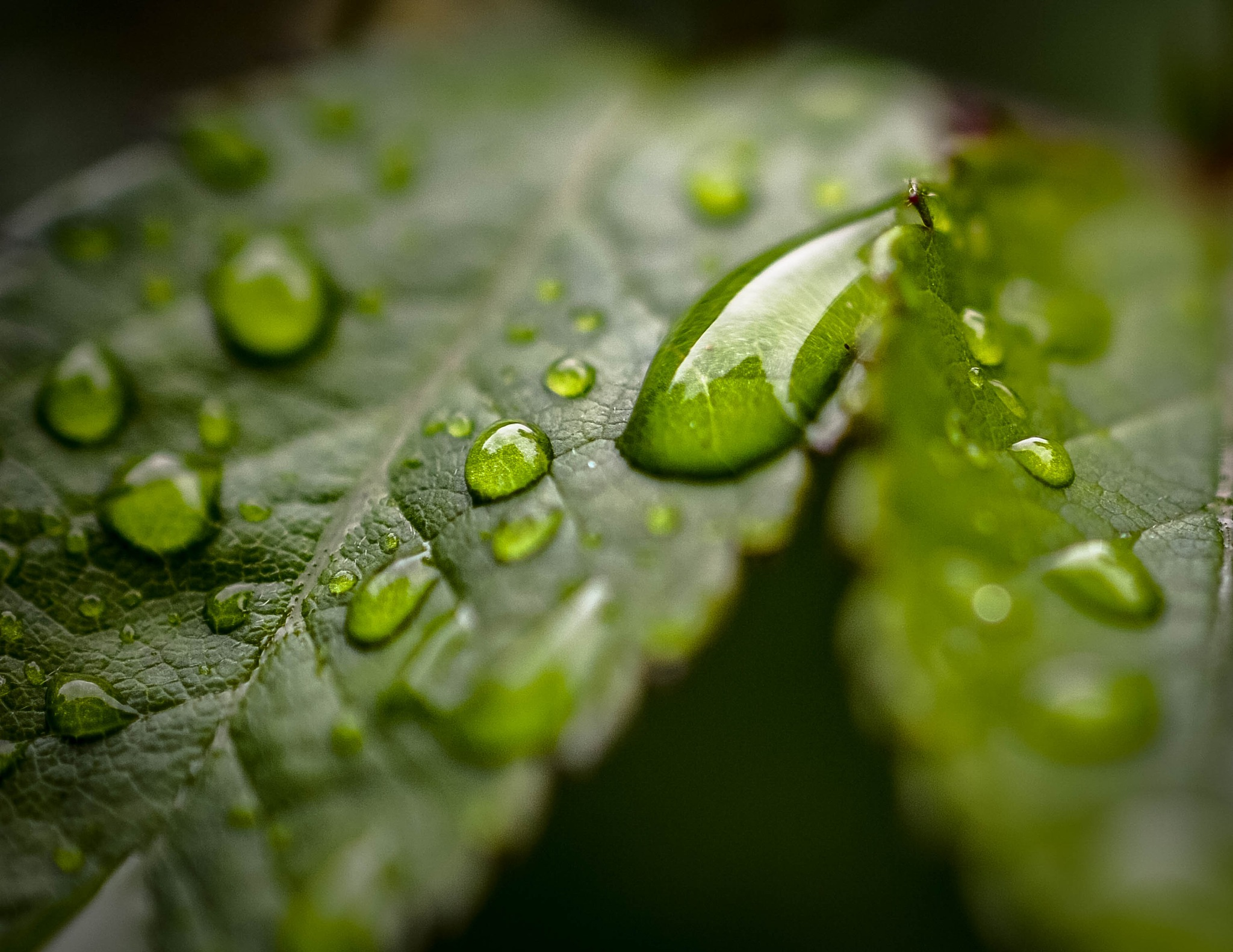 Rain by sue_duq