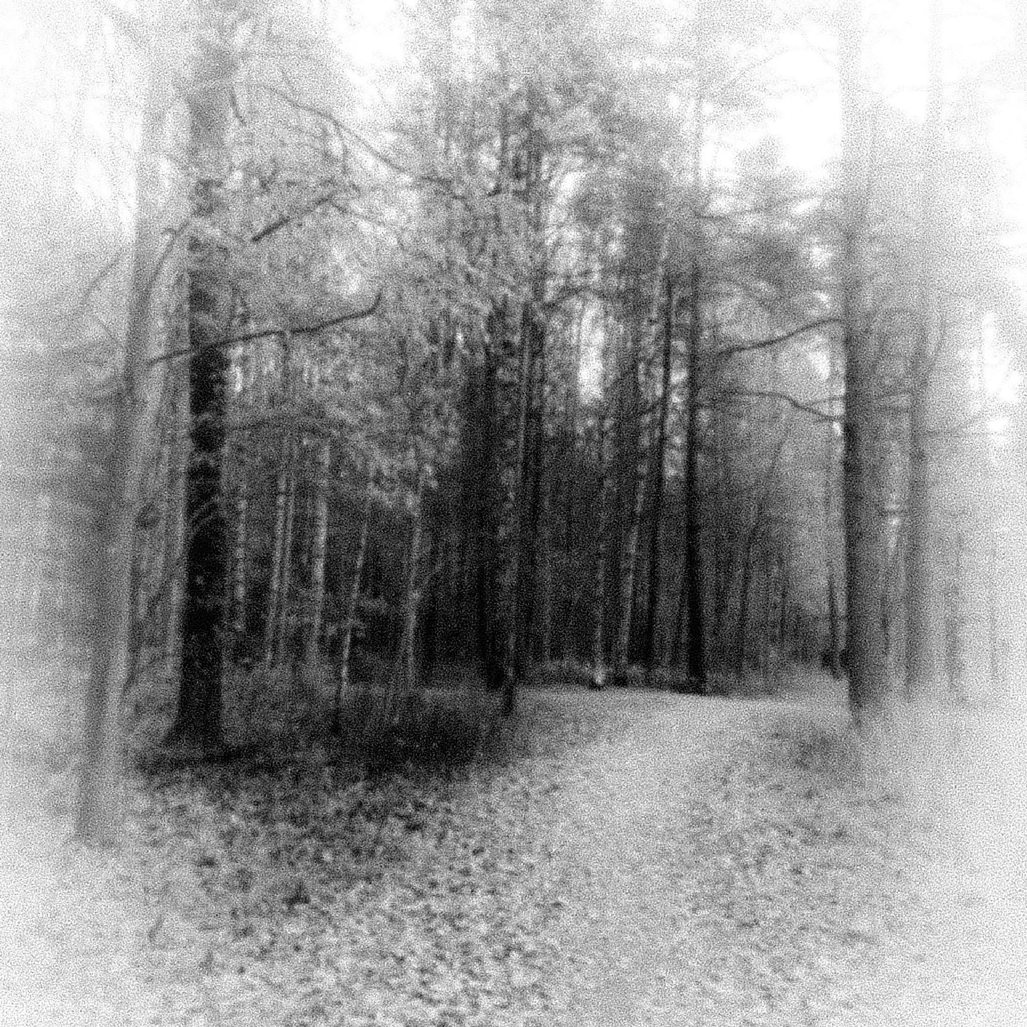 forest by susanne.welin.3