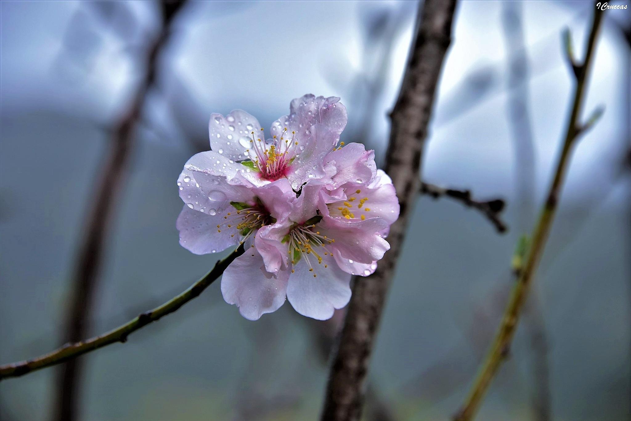 L'acqua è vita ma se si posa su un fiore è bellezza pura... by ignazio cruccas