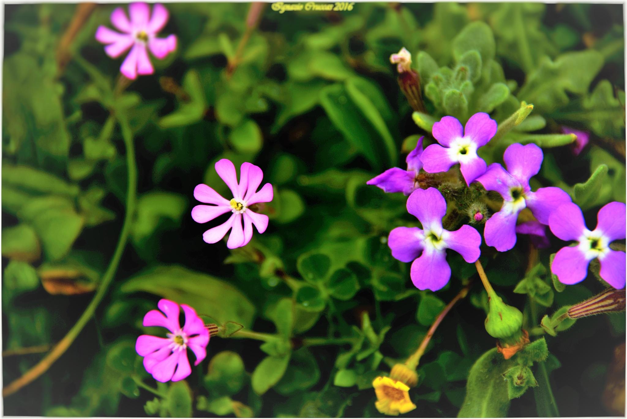 Piccoli fiori selvatici by ignazio cruccas