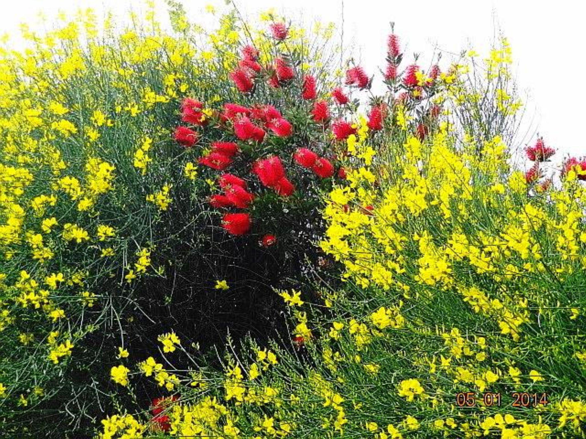 Un po' di giallo,un po' di rosso..... by ignazio cruccas