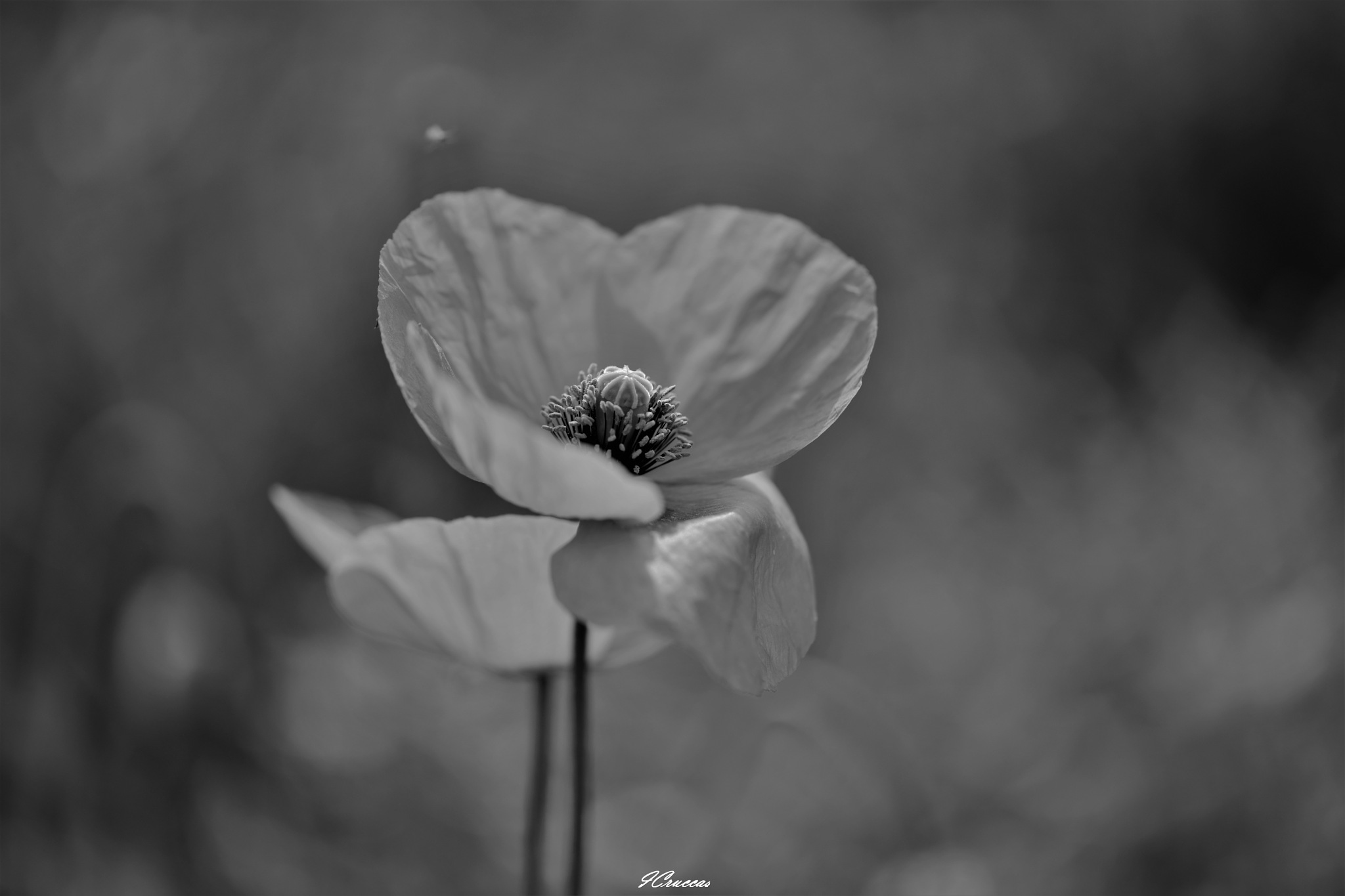 Colorless, but not without charm by ignazio cruccas
