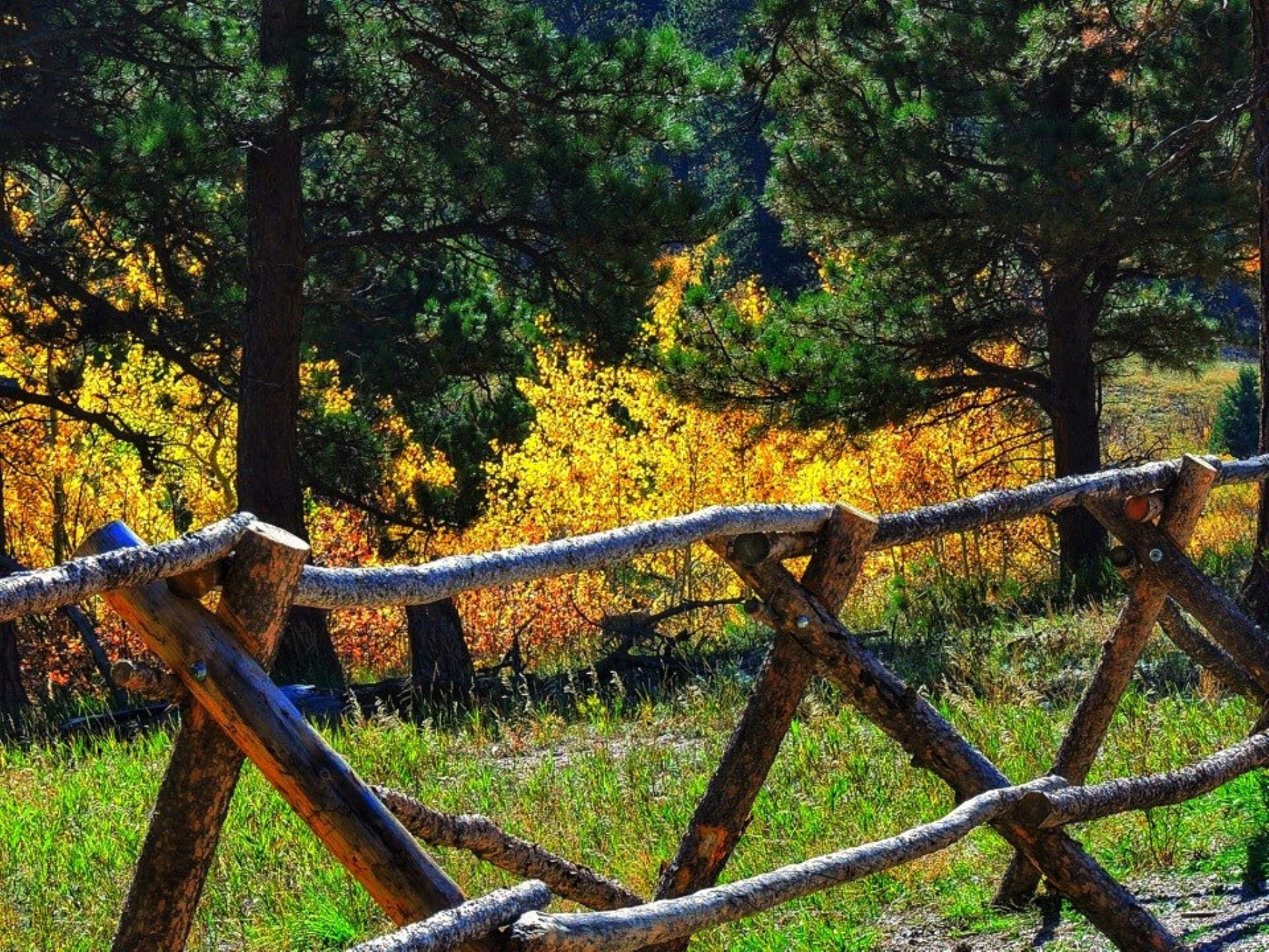 Fall in the Rockies by PMcWhirt