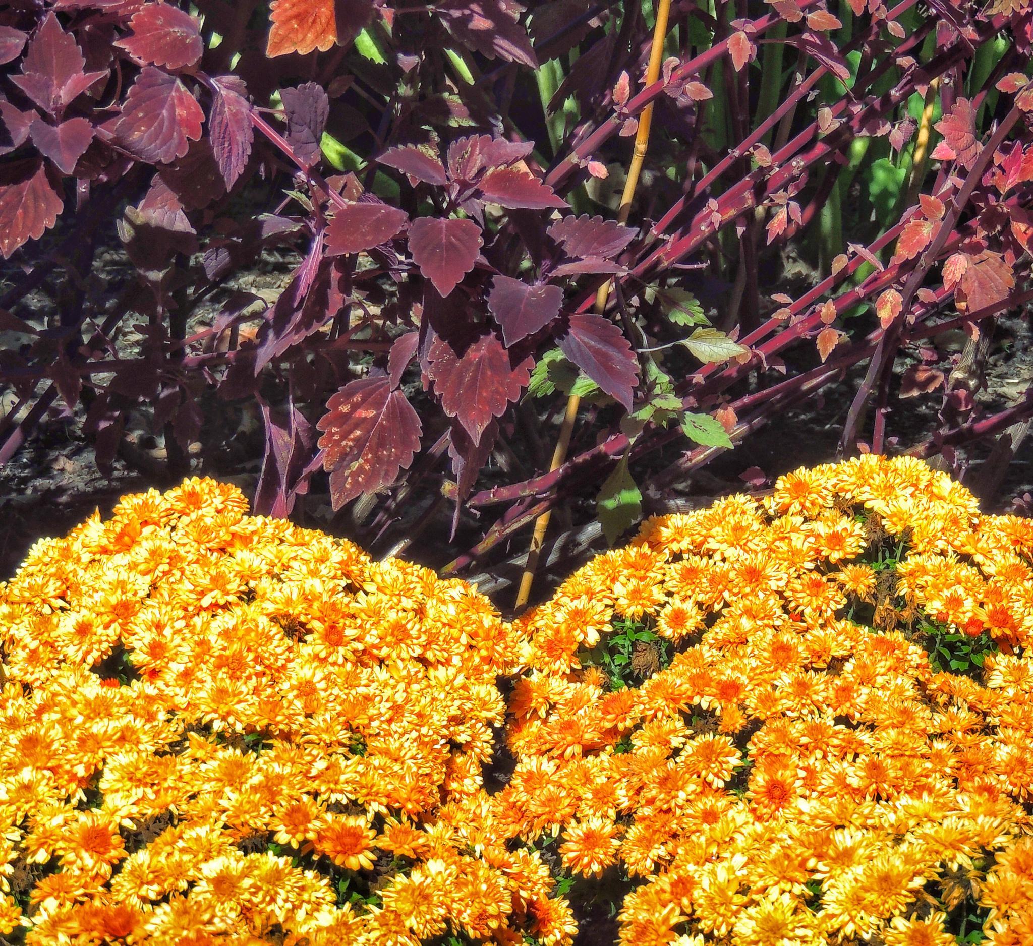 Fall Garden by PMcWhirt