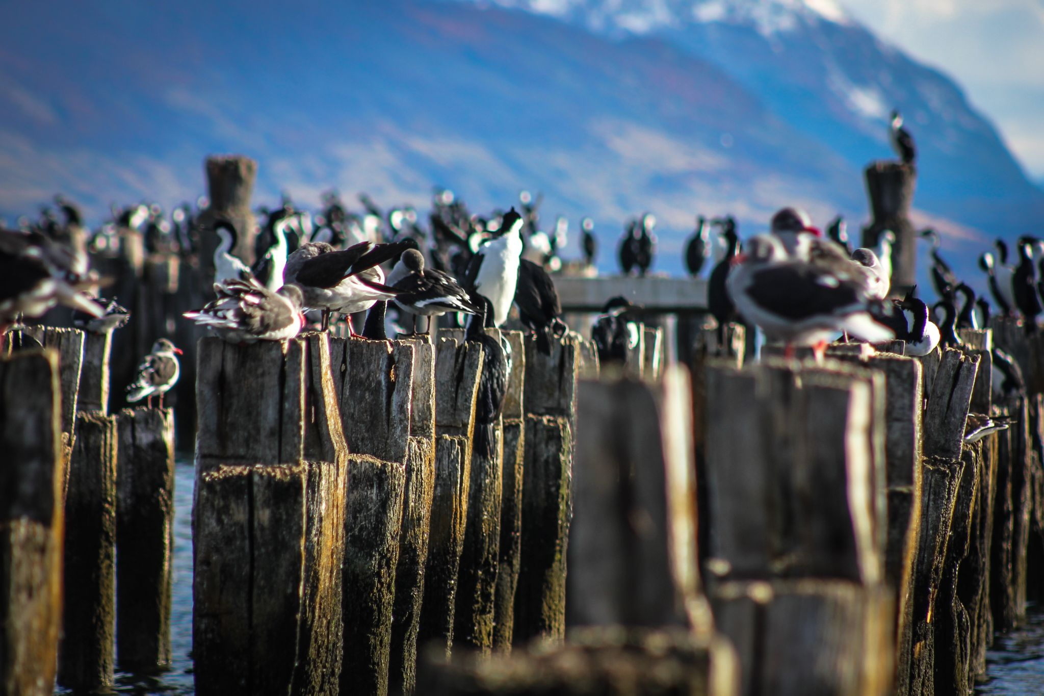 Muelle Cormoranes by By3nz