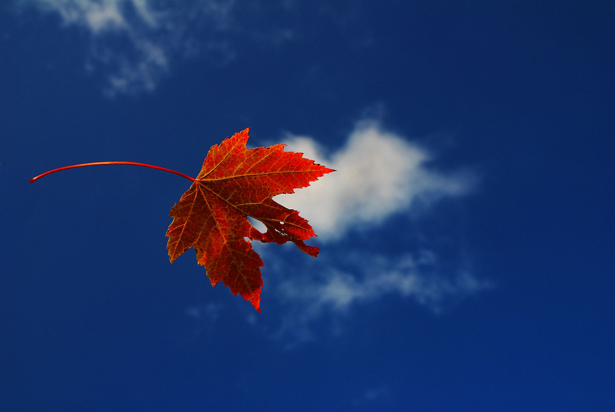 Blue Fall by keith.willette.9