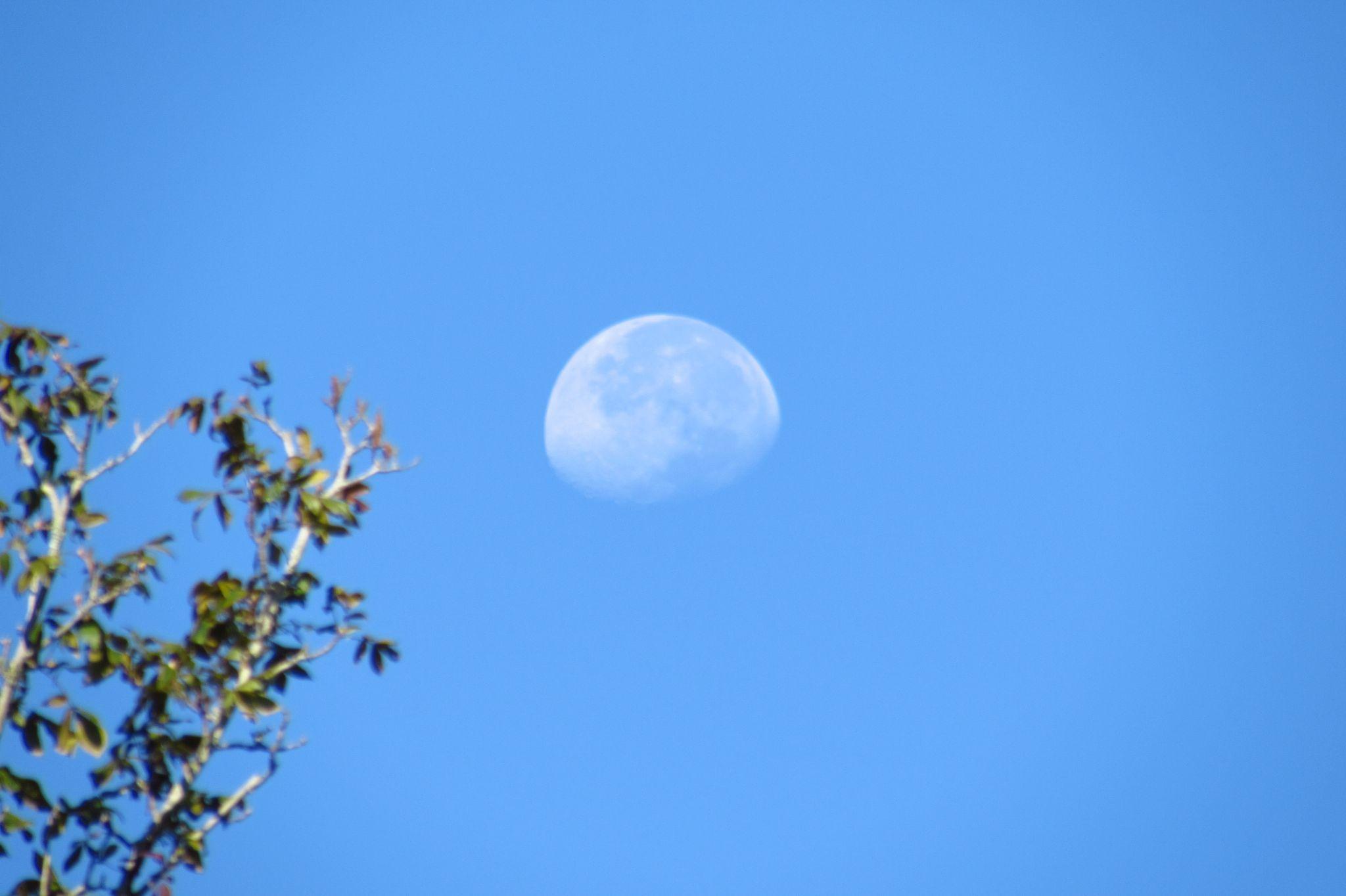 day moon by tdecooman