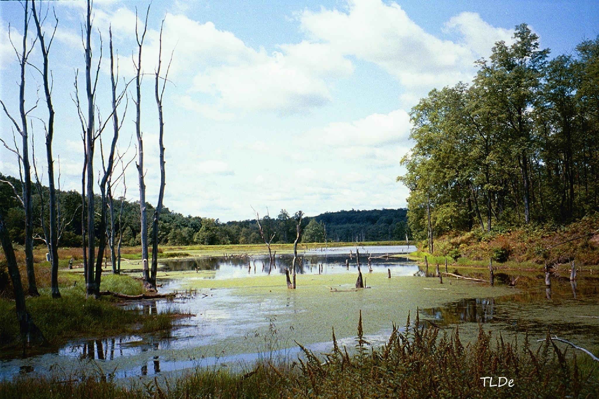 Buzzard Swamp by tdecooman