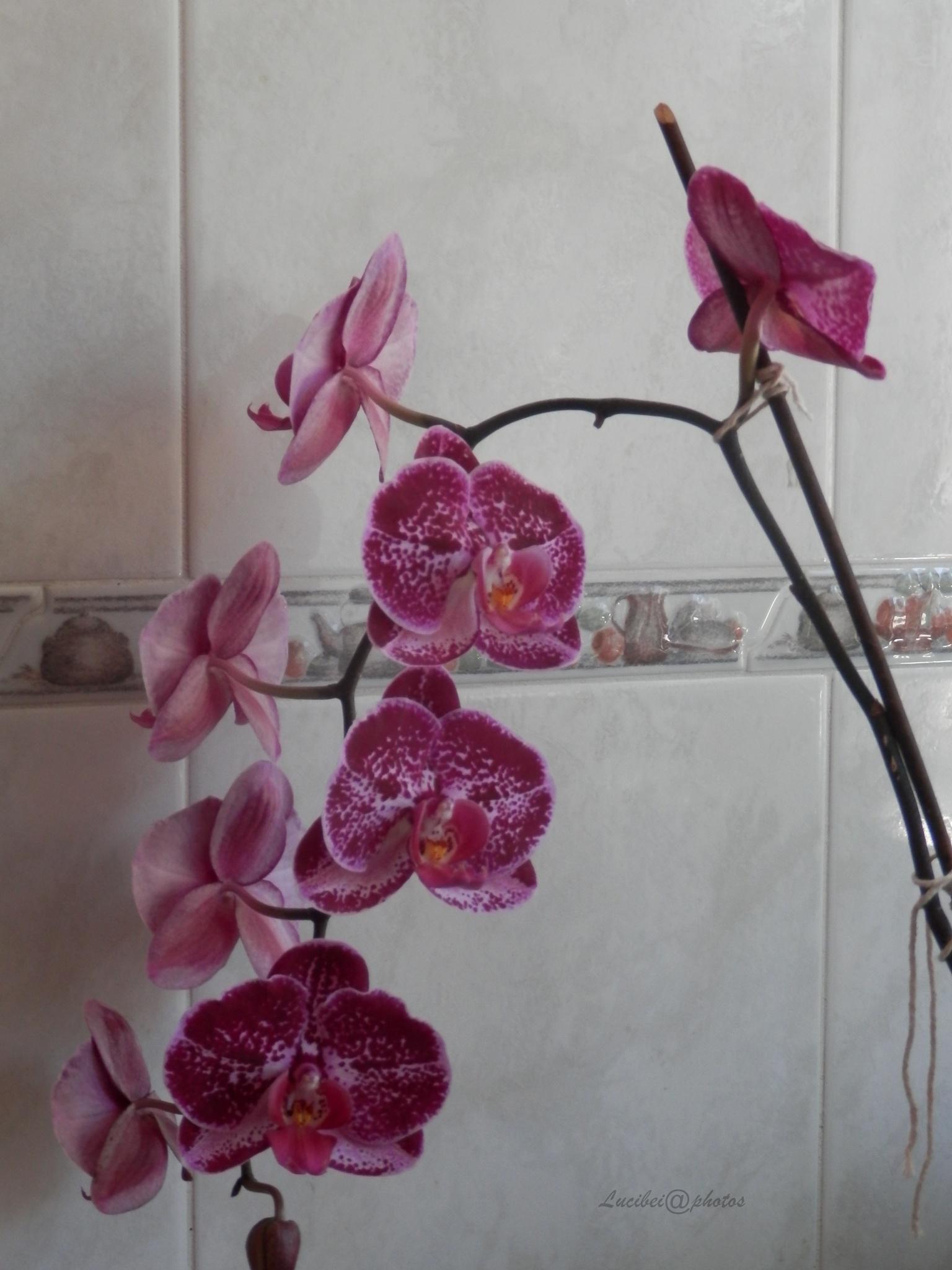 Flowers by lucia.ribeiro.33