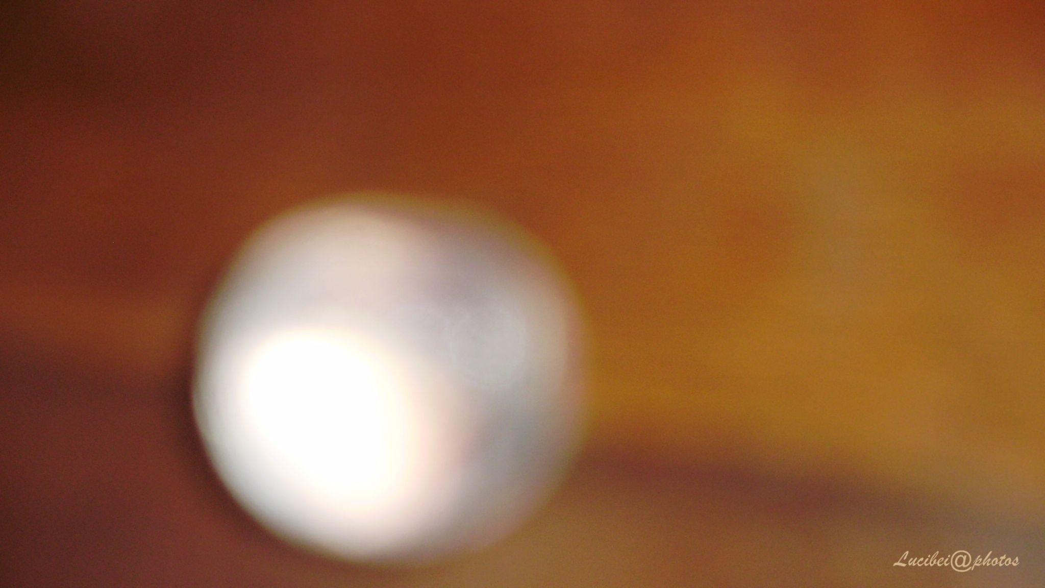 Pearl by lucia.ribeiro.33