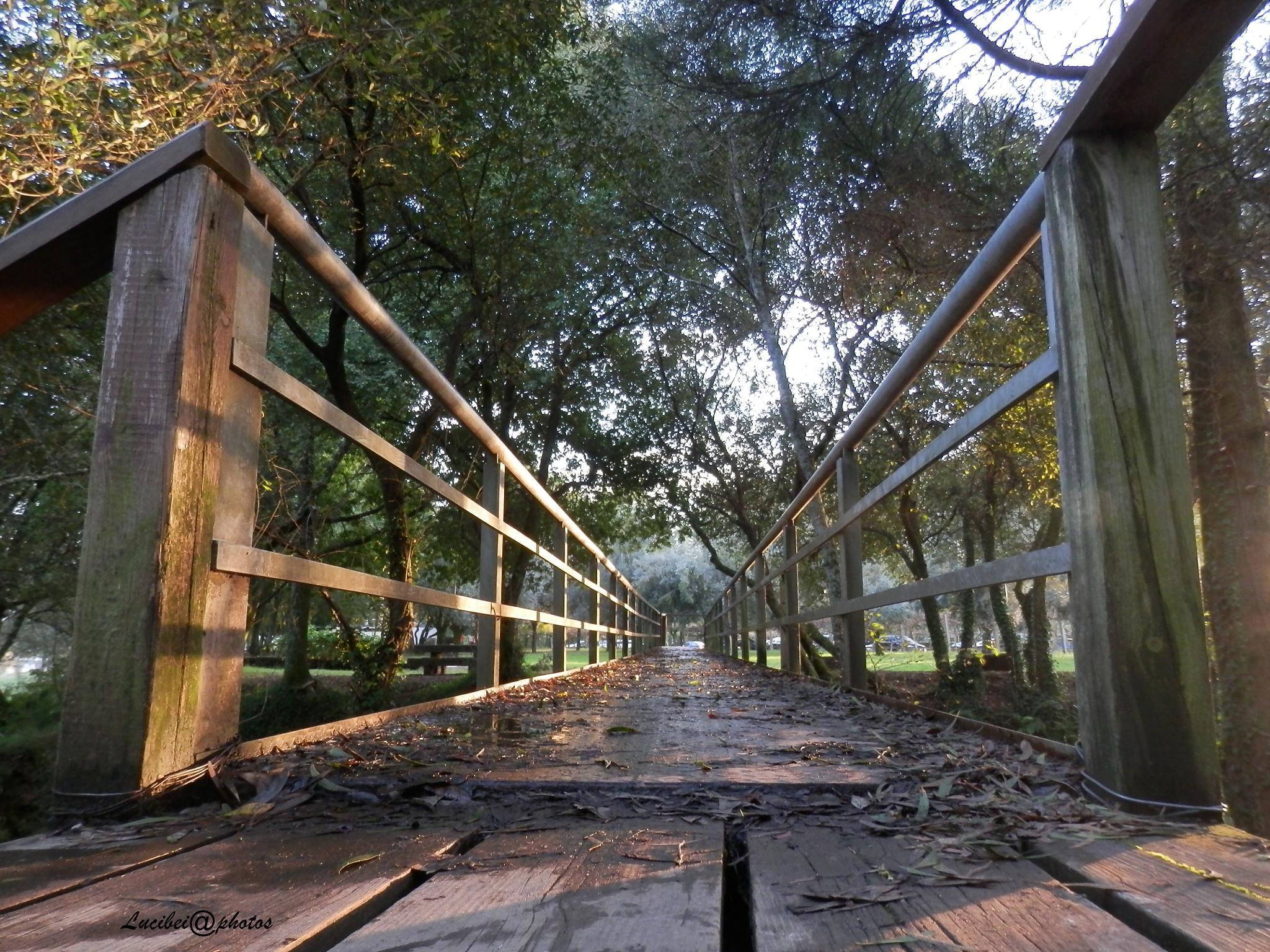 The bridge by lucia.ribeiro.33