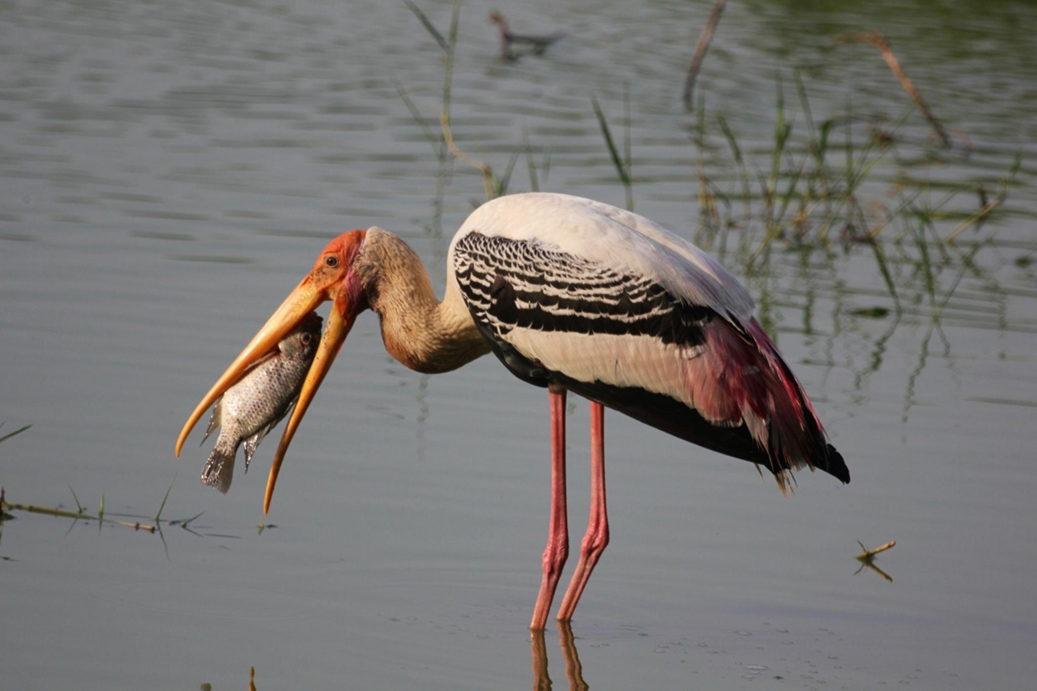 Horizontal perfect catch !!!... by Madhubala