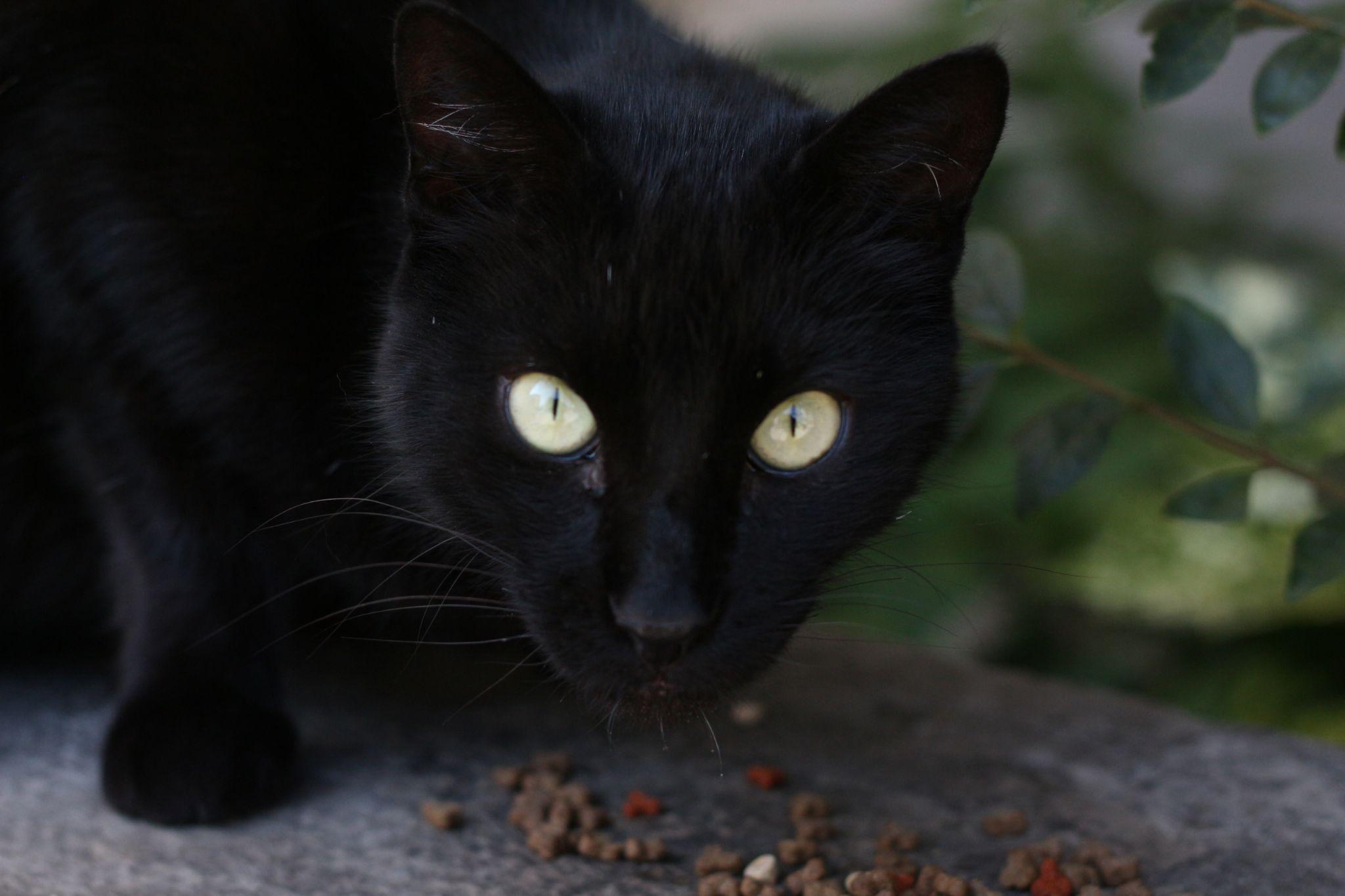 CAT by badis.badichon