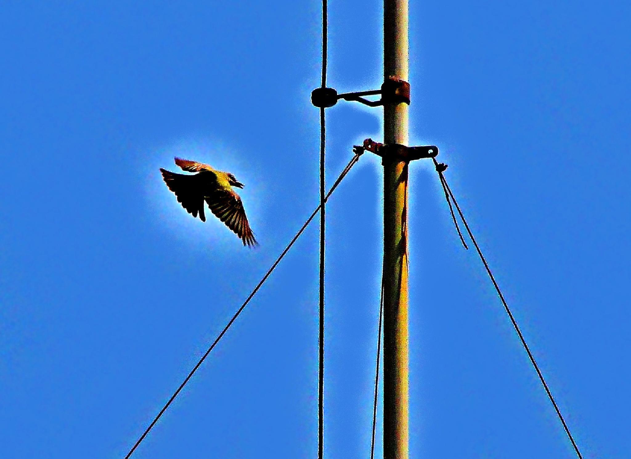 Urban composition with bird by valcir.siqueira.7