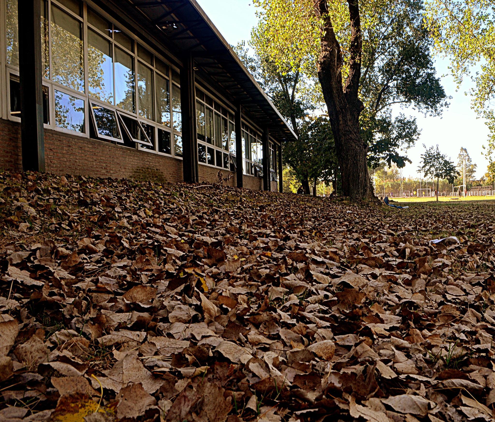 Leaf Carpet by claudio.spirito.7