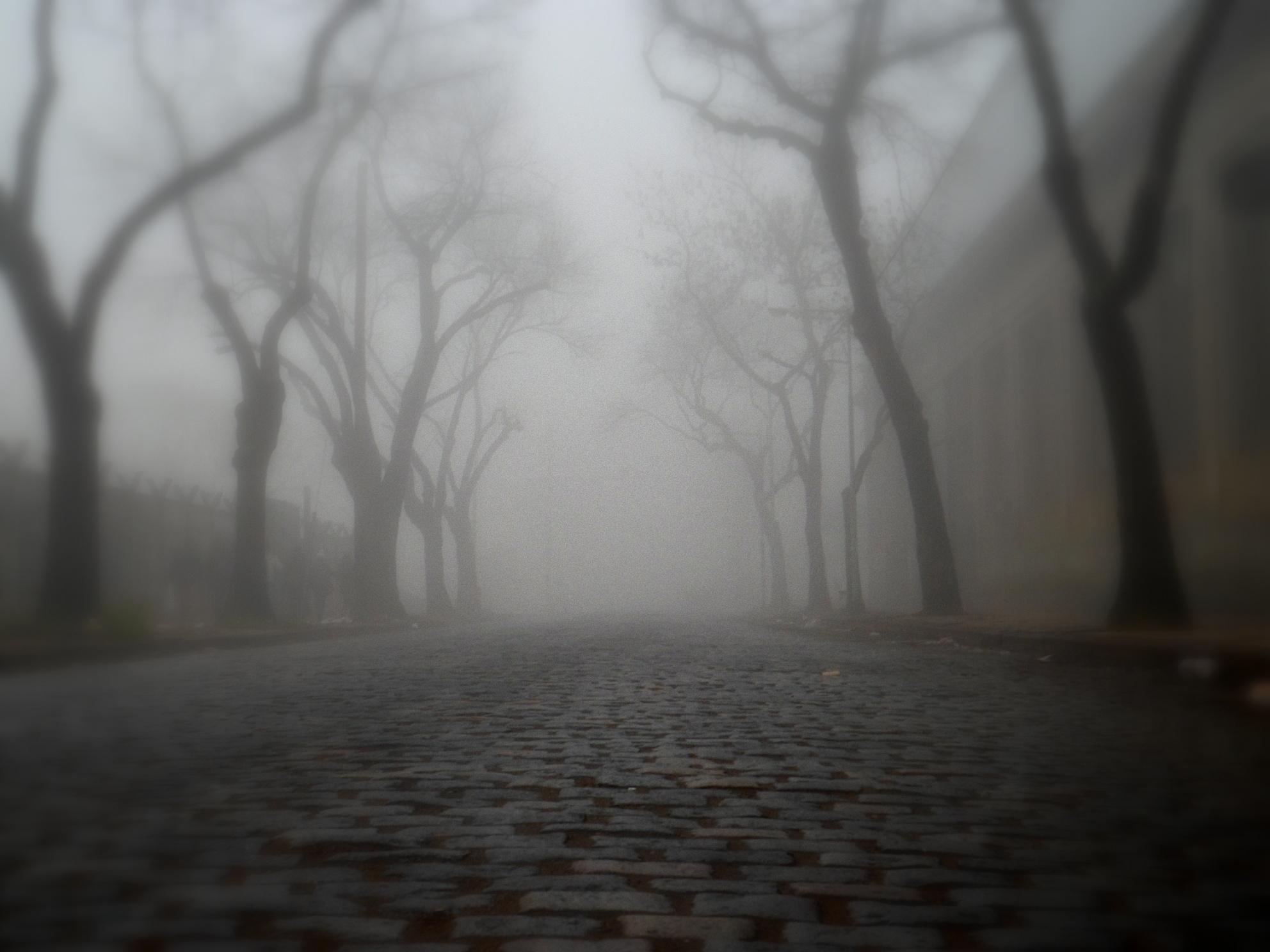 Into the fog by claudio.spirito.7