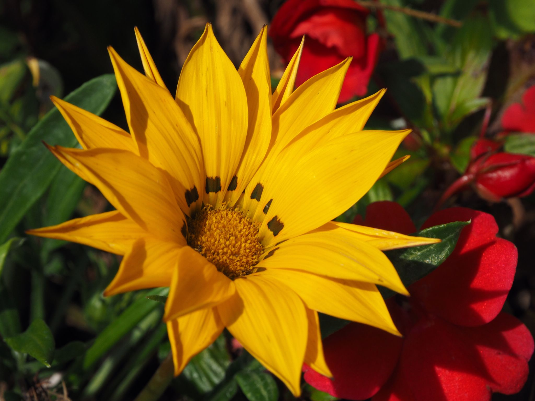 Flower by haydn.greenow