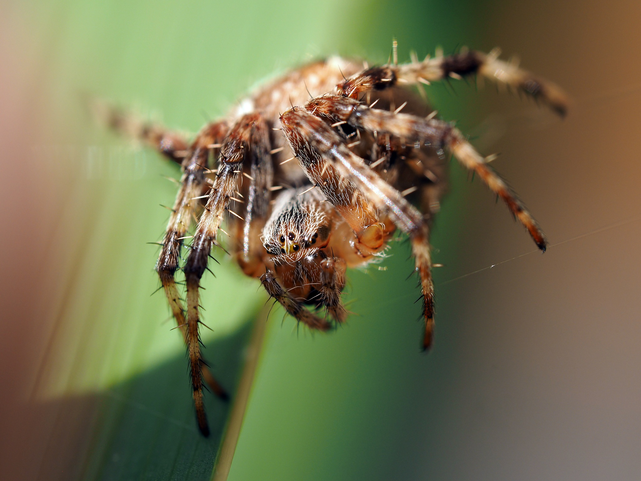 Spider by haydn.greenow