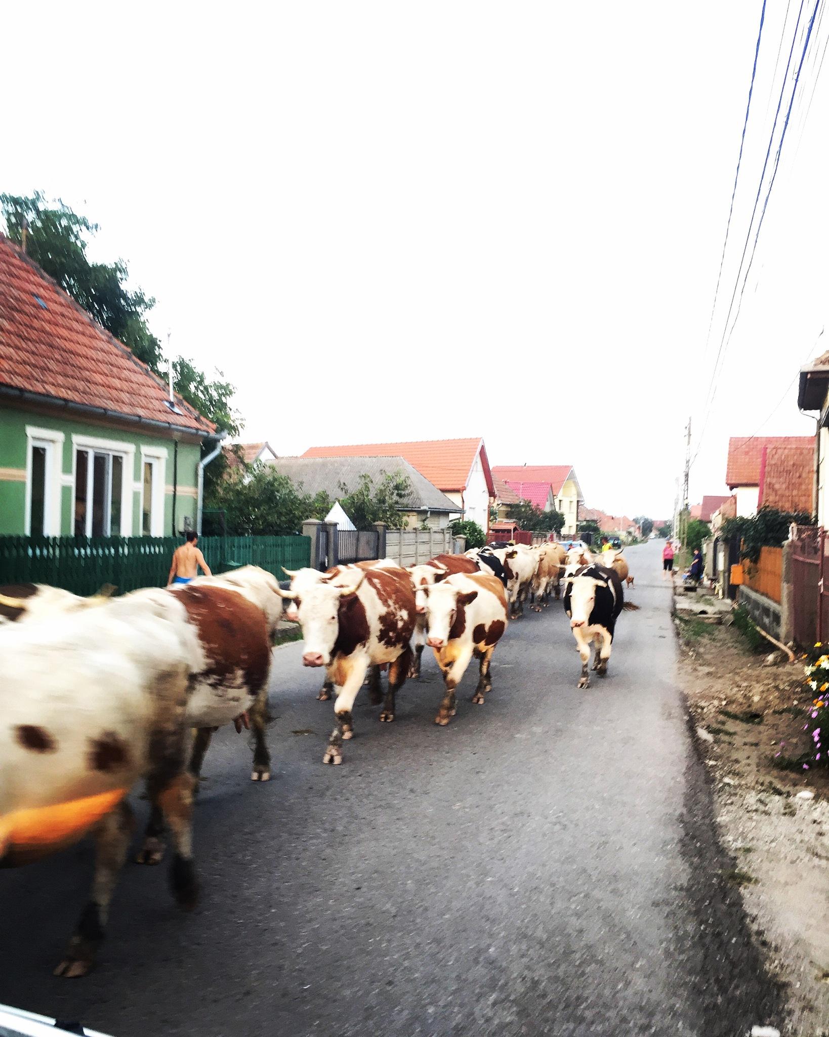 Traffic jam  by DanielaE
