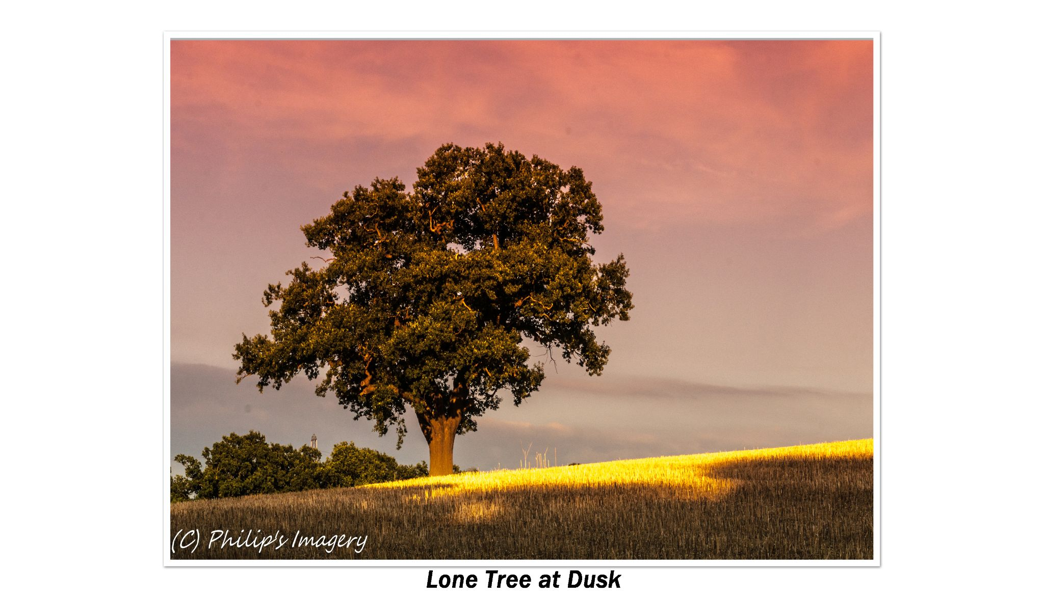 Lone Tree at Dusk by philips images