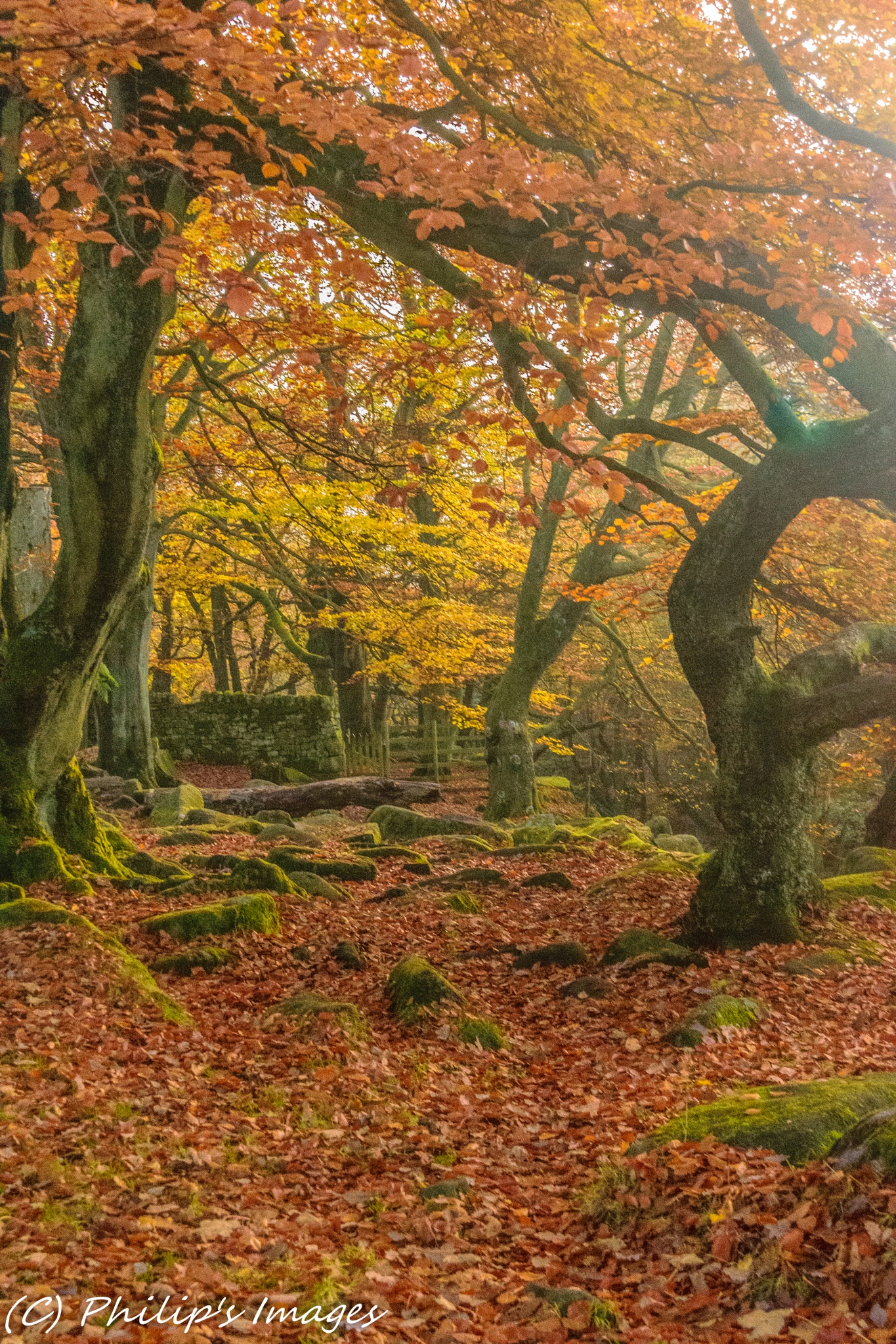 Padley Gorge Autumn by philips images