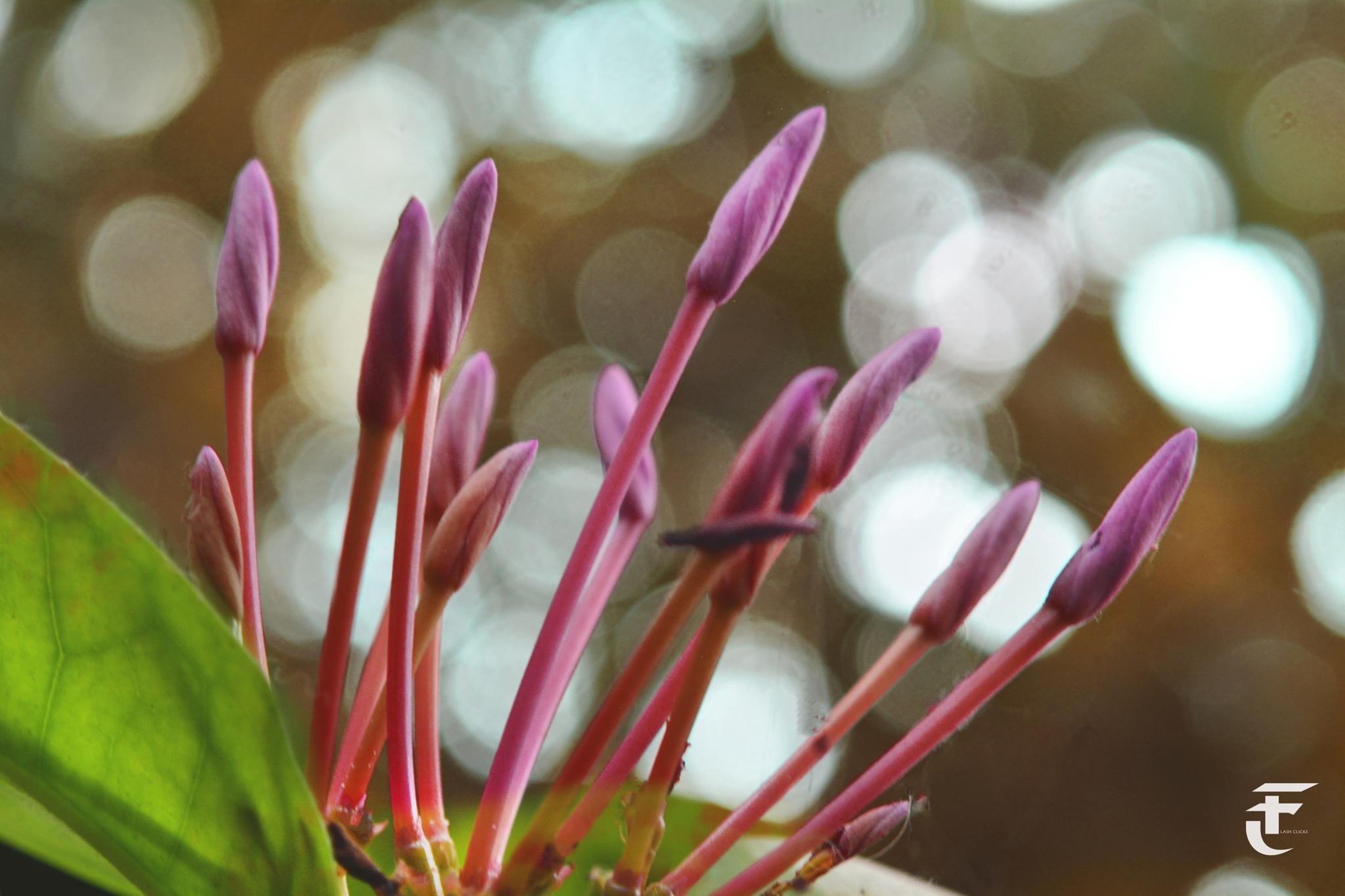 flowers by pankaj.kokolu
