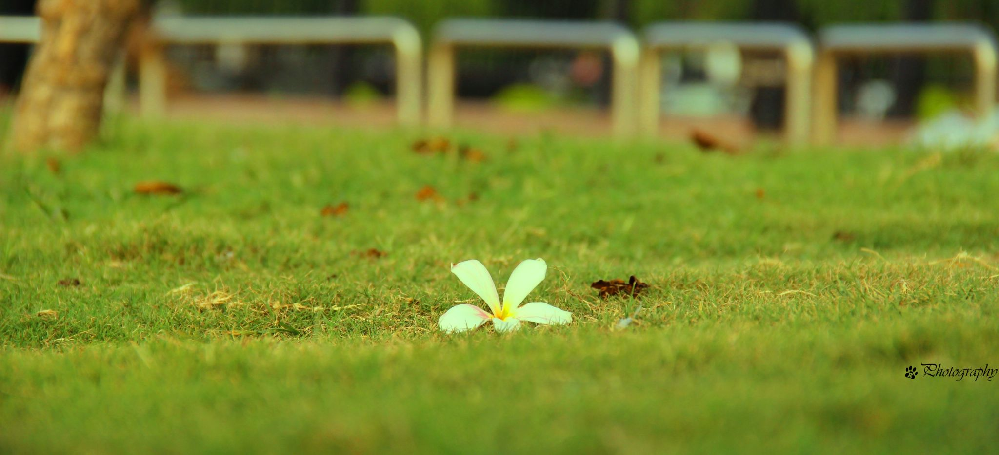 Be always blooming by imRohitSingh
