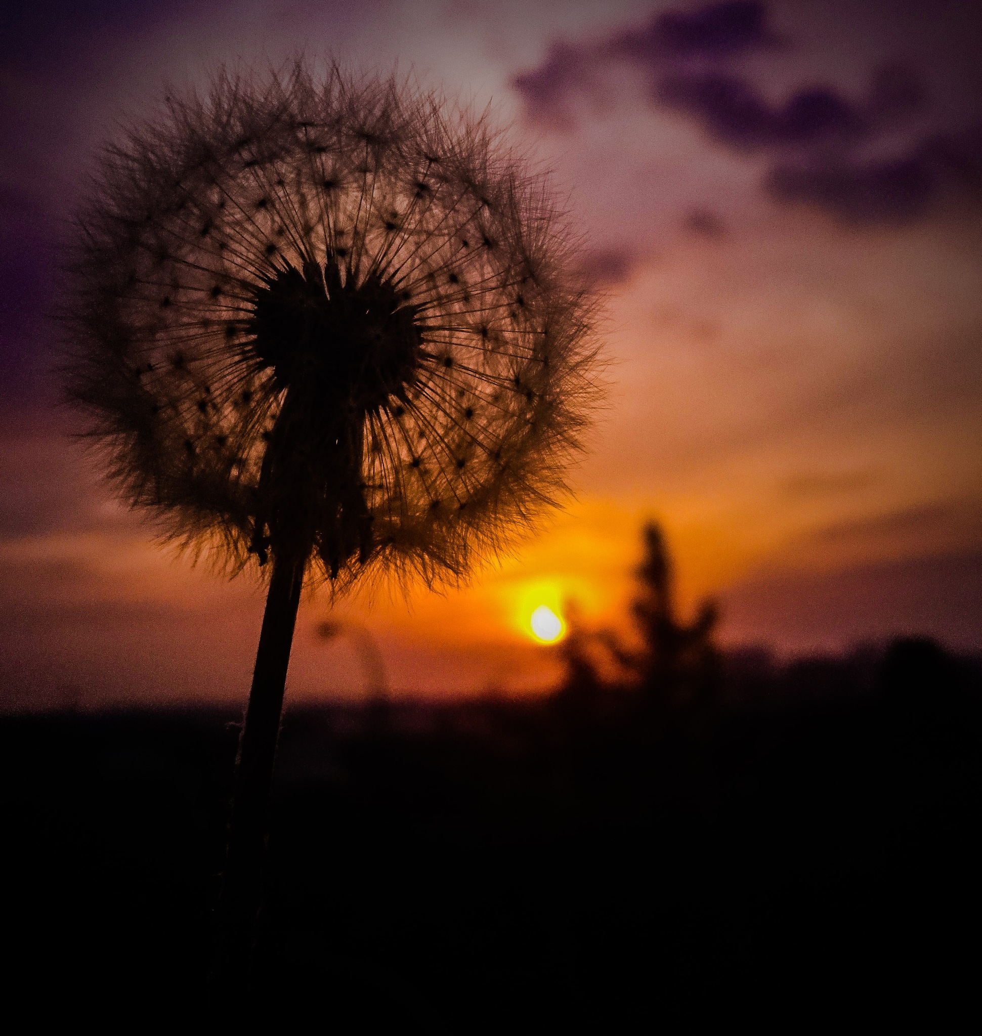 Dandelion and sunset by ElianoJr