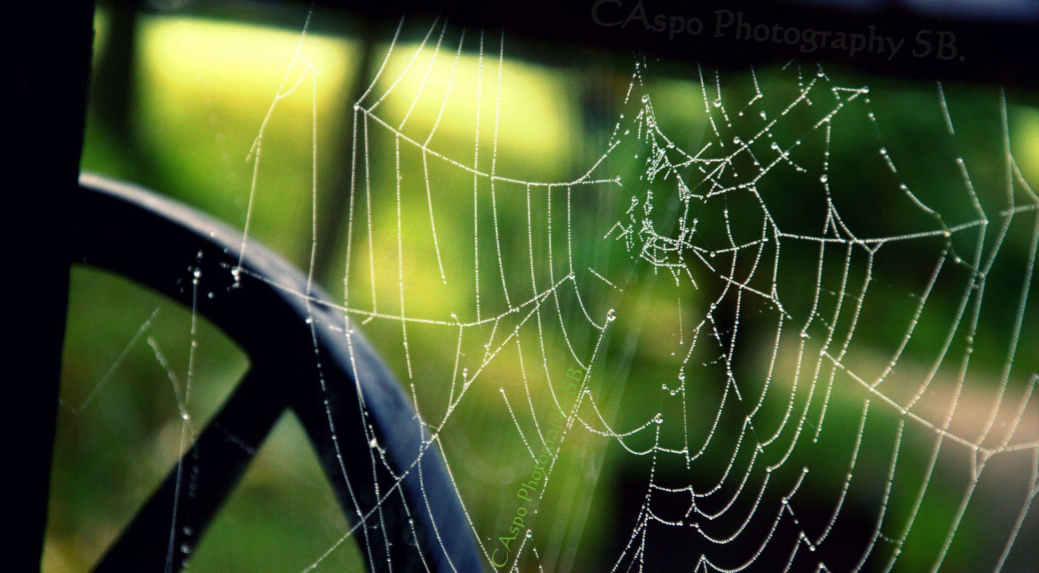 web by rastislavk1