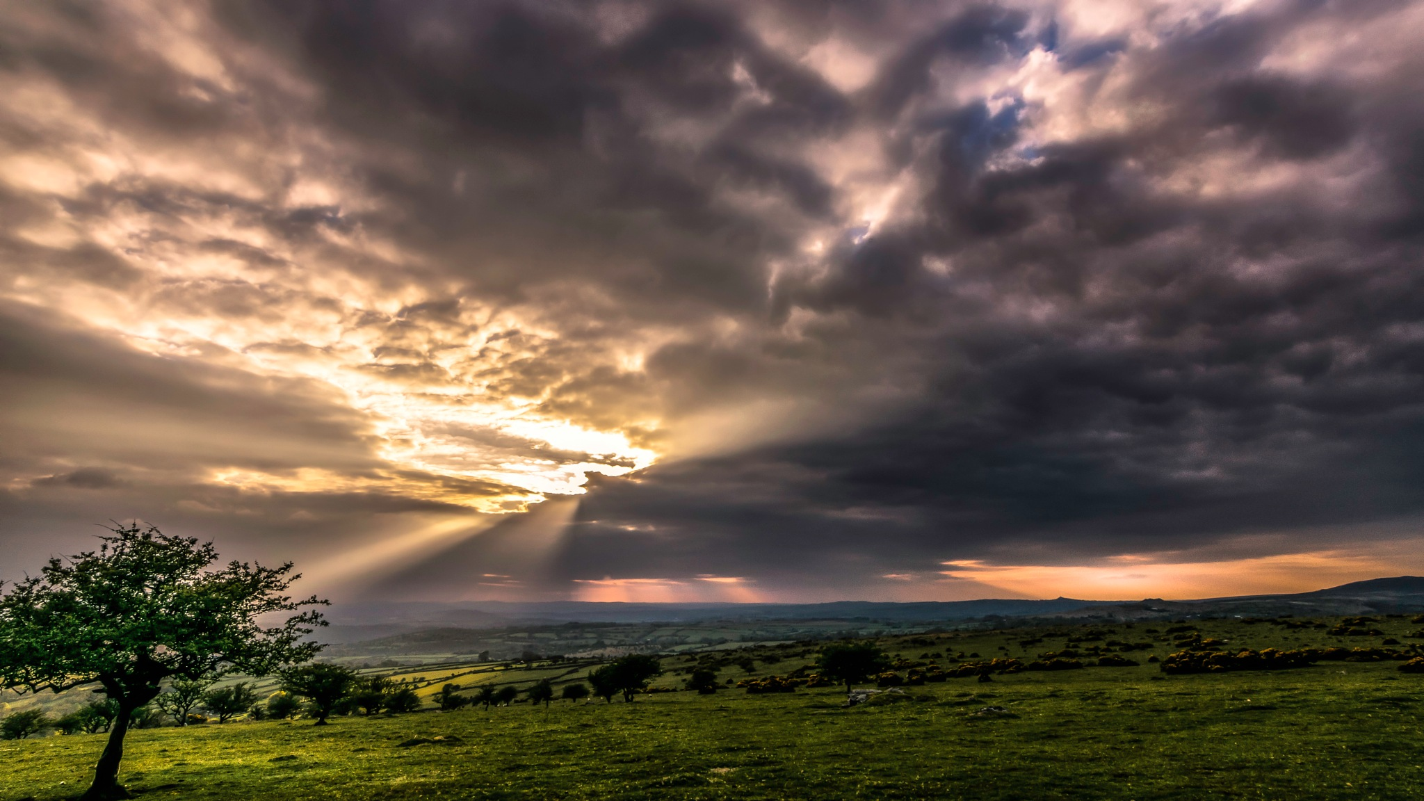 hawthorn rays by phillip ticehurst