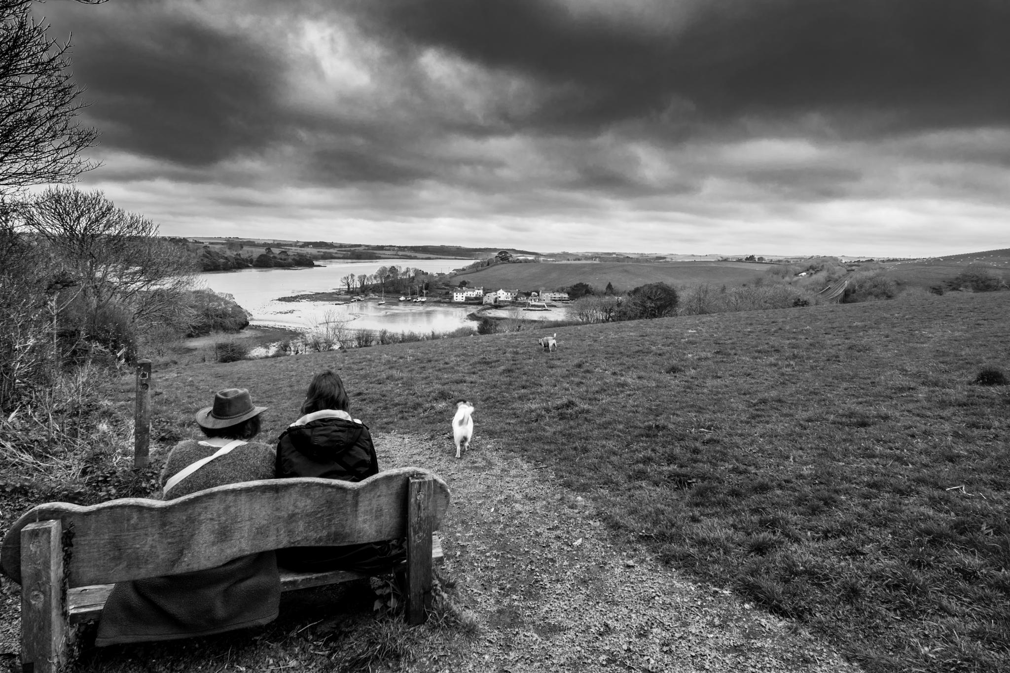 looking at the view by phillip ticehurst