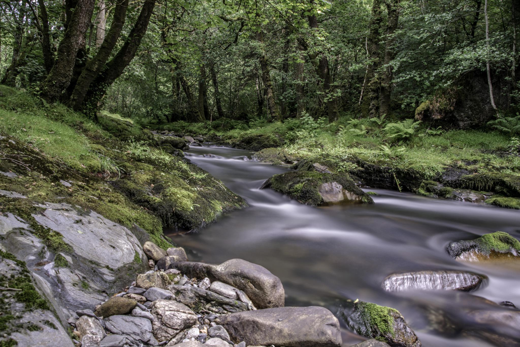 river walkham , devon by phillip ticehurst
