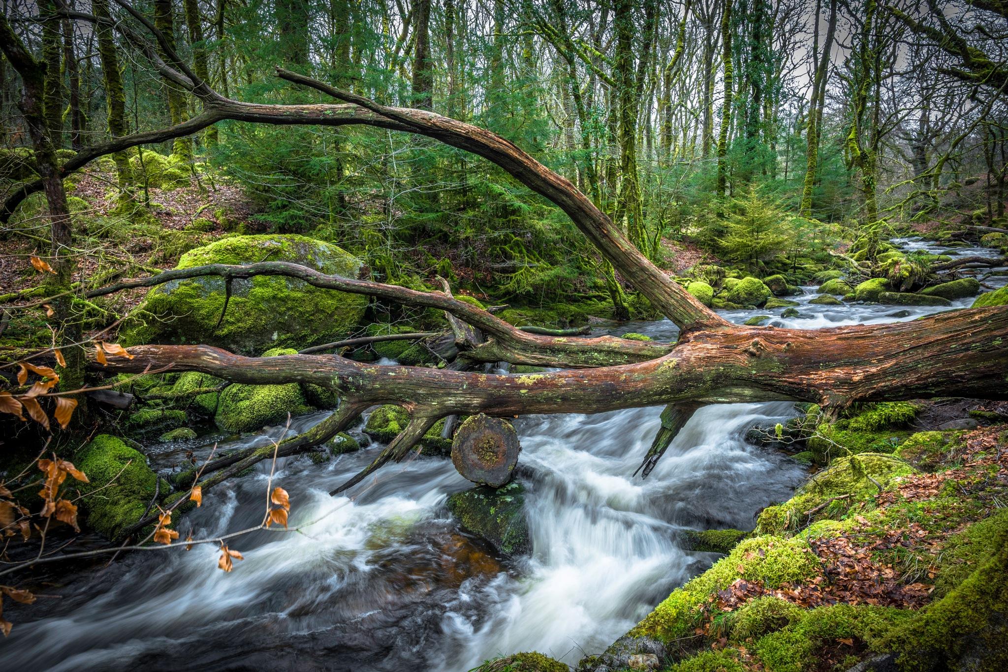 Fallen Tree by phillip ticehurst