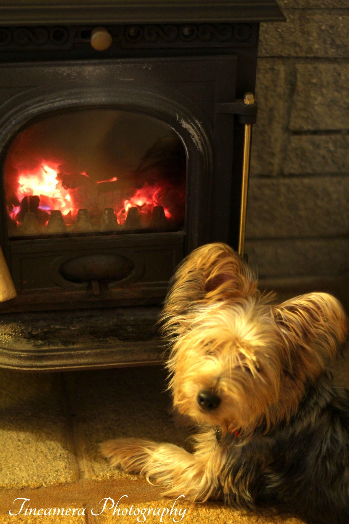 My dog Reo, warm as toast by john jenkinson