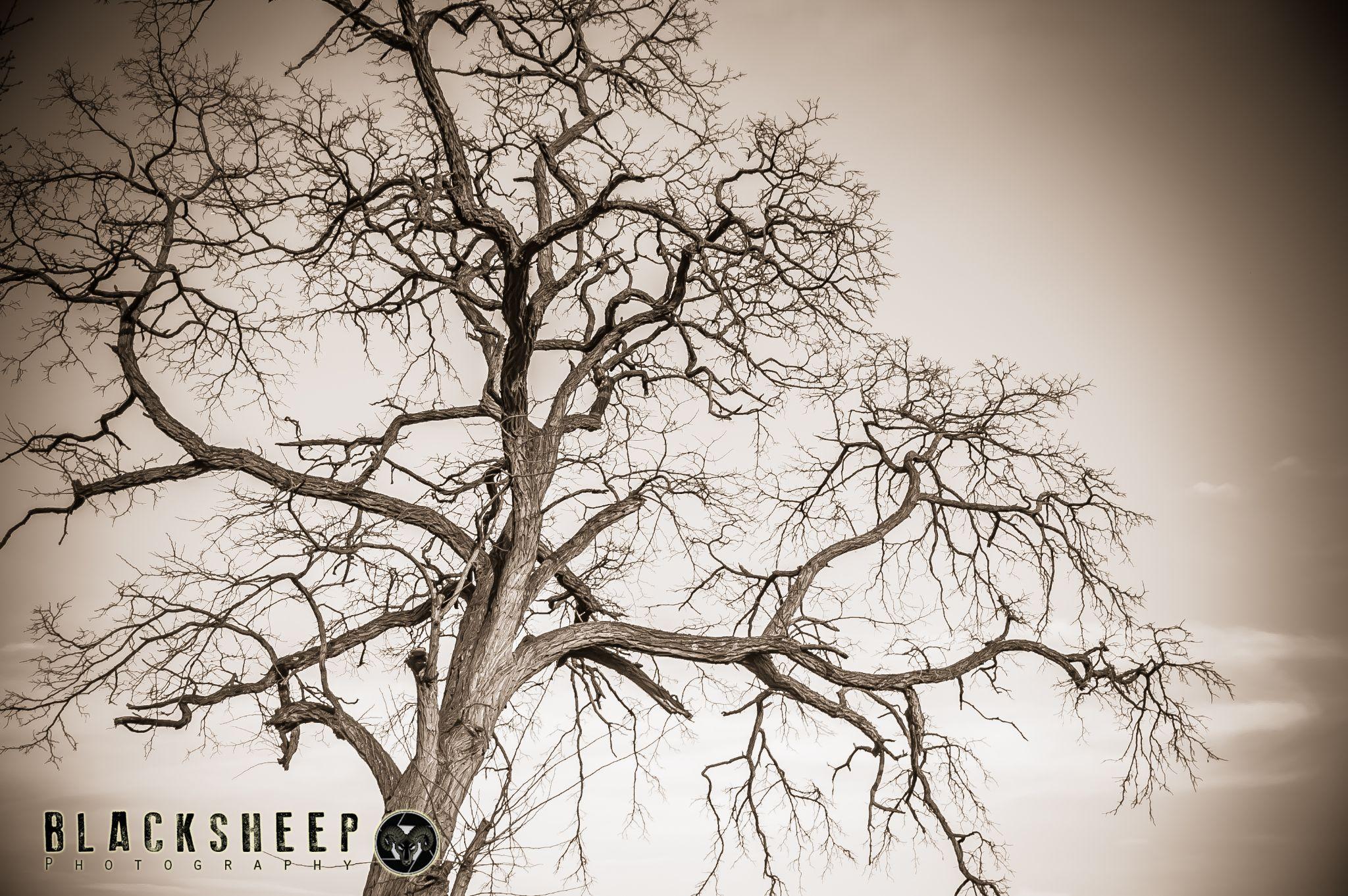 Untitled by Blacksheepfotos
