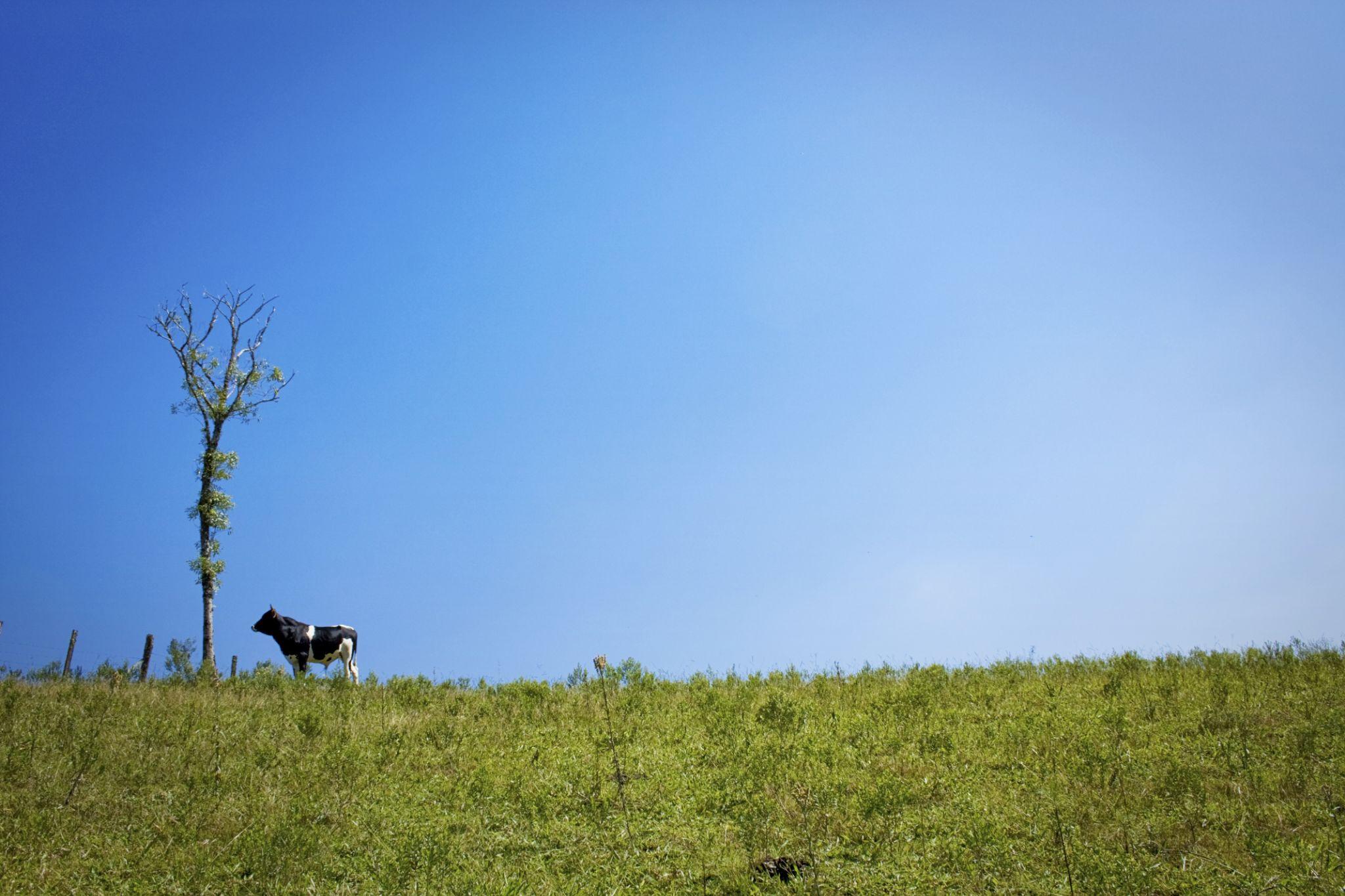 Alone by Bruno Carvalho