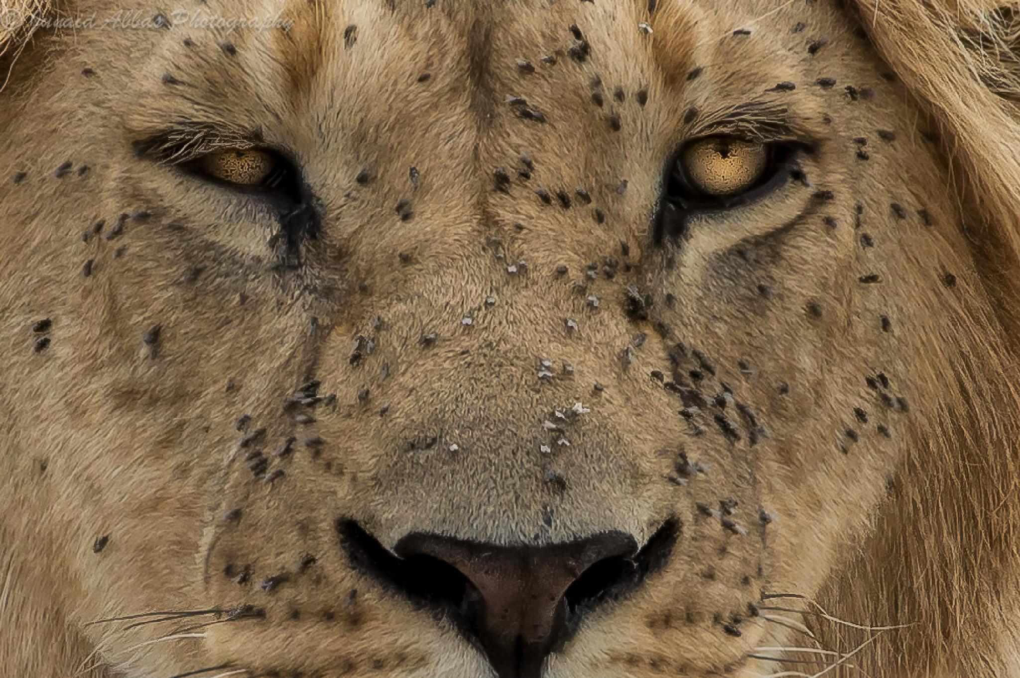 Scary Eyes by Junaid Abbas